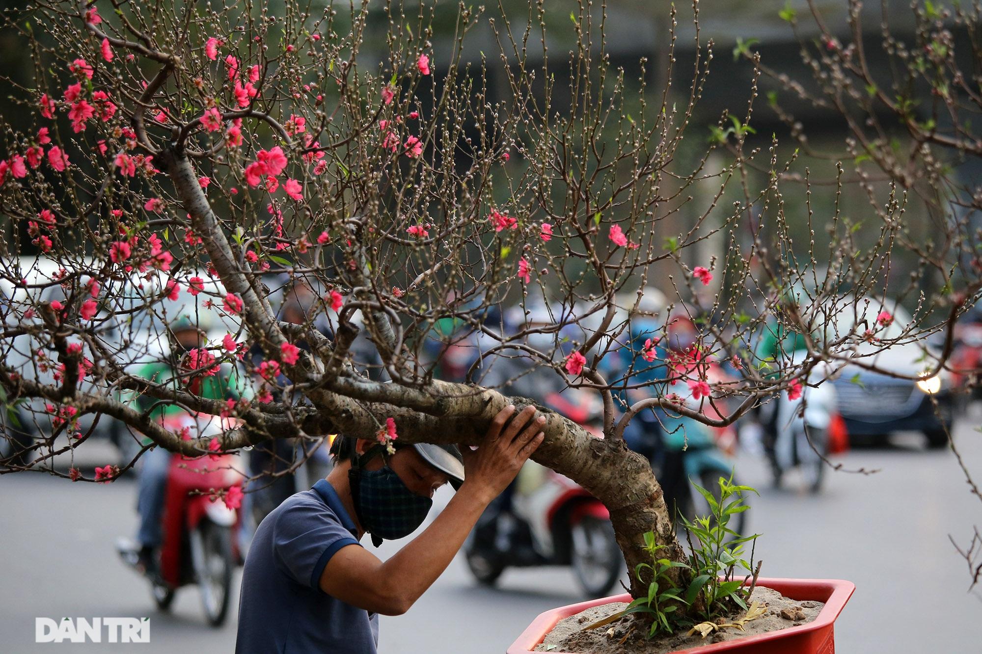 Chợ hoa bày bán trên đường phố Hà Nội đông khách bất chấp dịch Covid-19 - 10