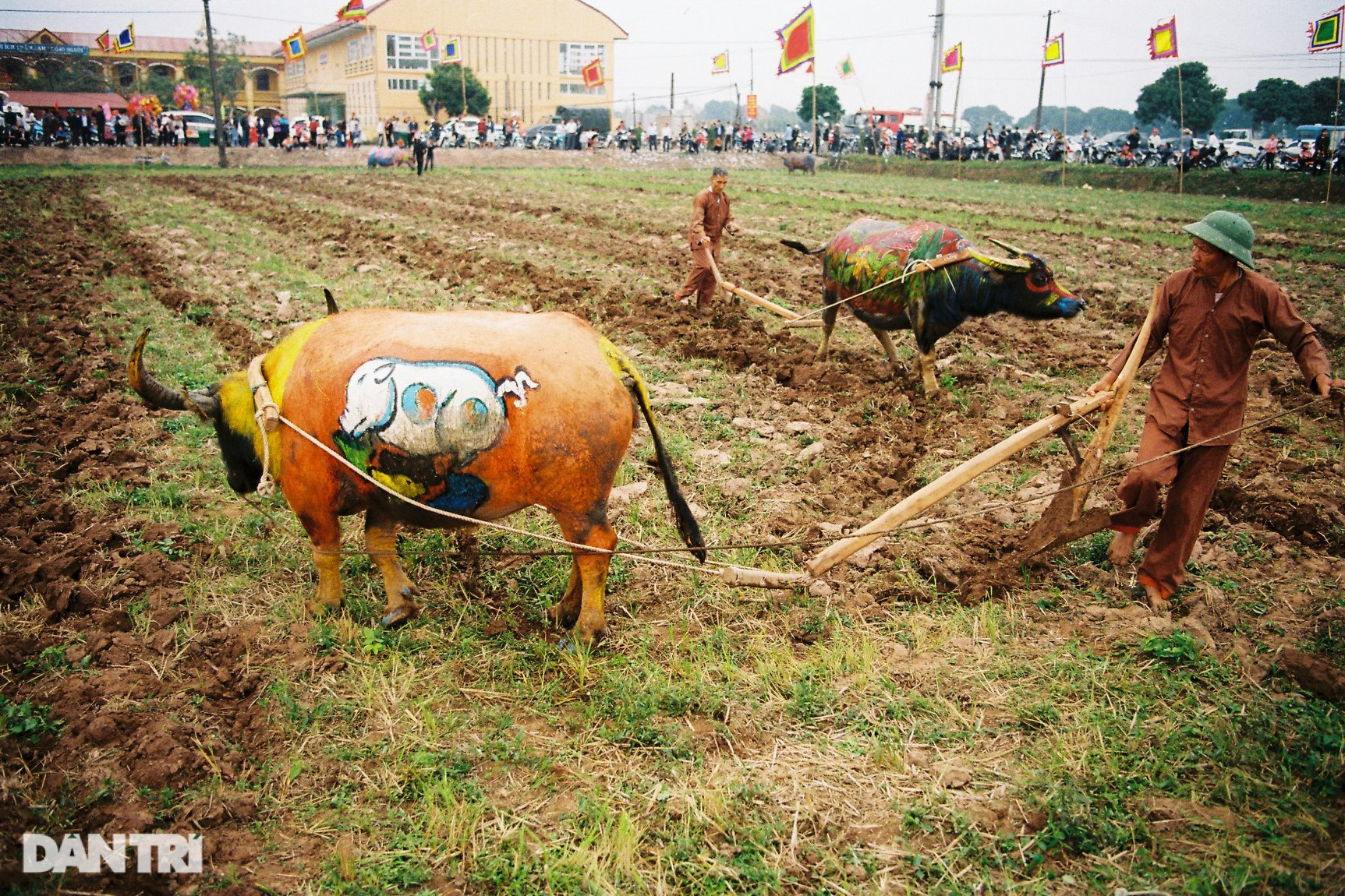 See the most beautiful festival in five buffaloes but be canceled due to the Covid-19-19 epidemic