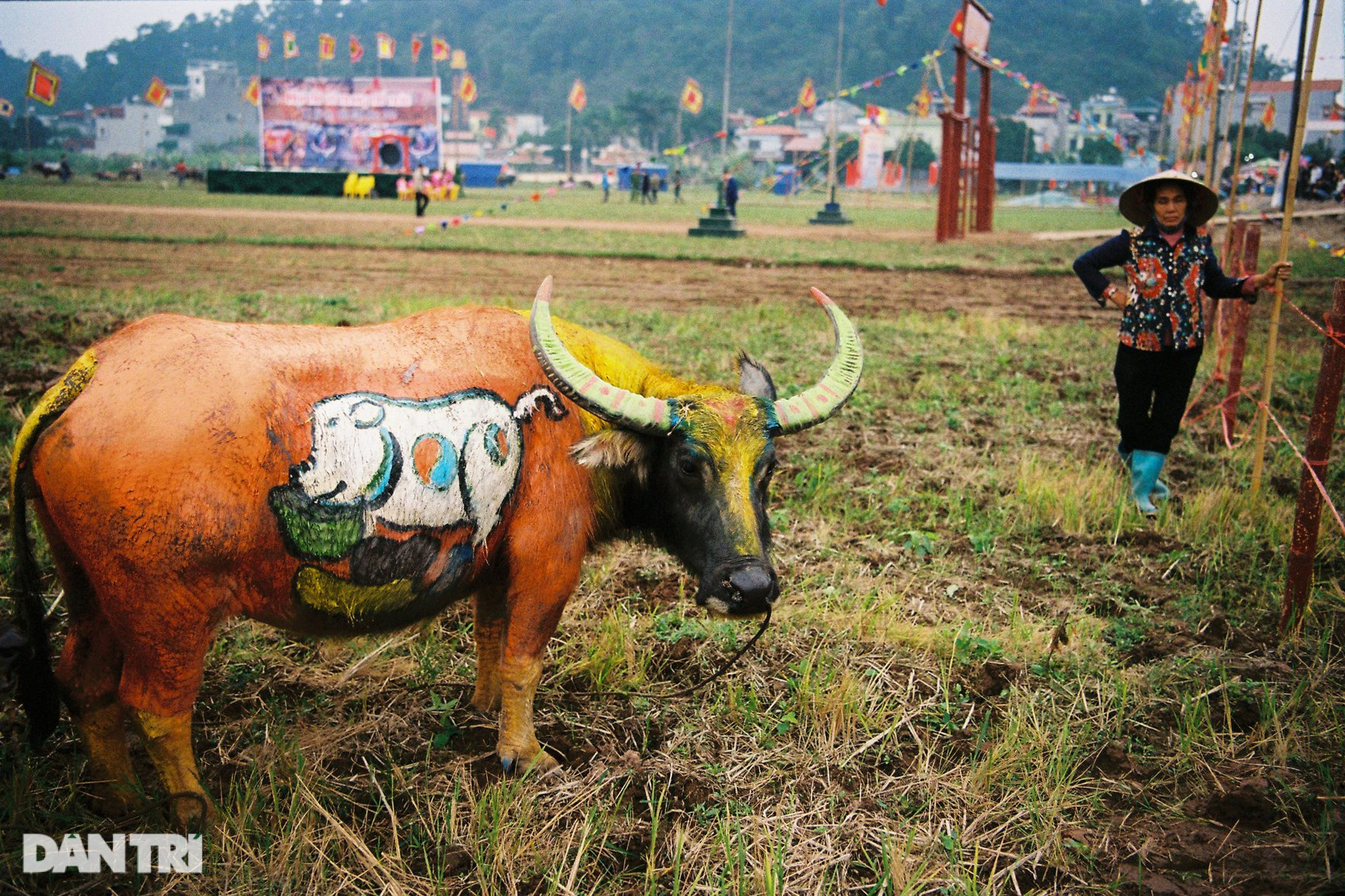 See the most beautiful festival in five buffaloes but be canceled due to the Covid-19 - 4 epidemic