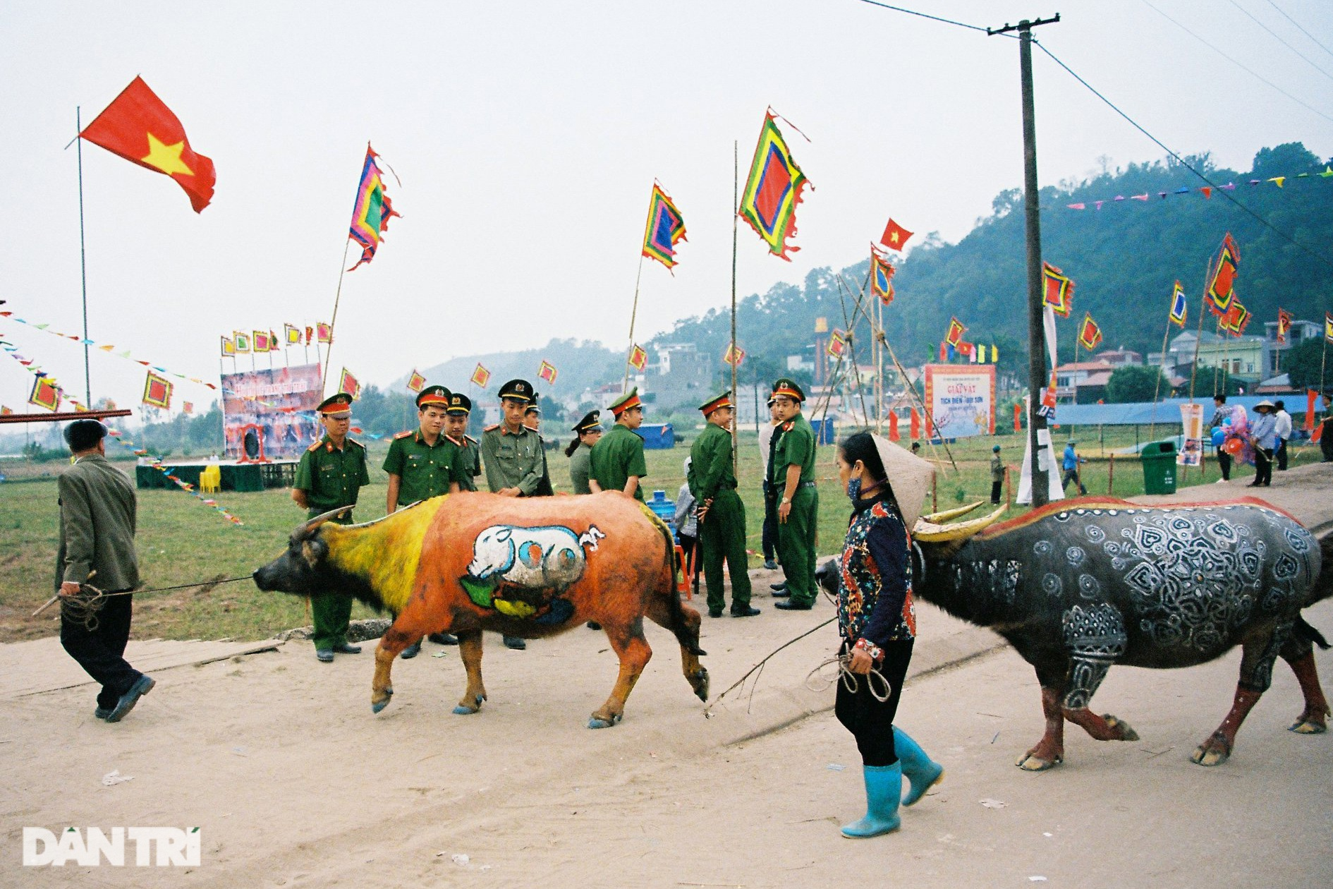 See the most beautiful festival in five buffaloes but be canceled due to the Covid-19-1 translation