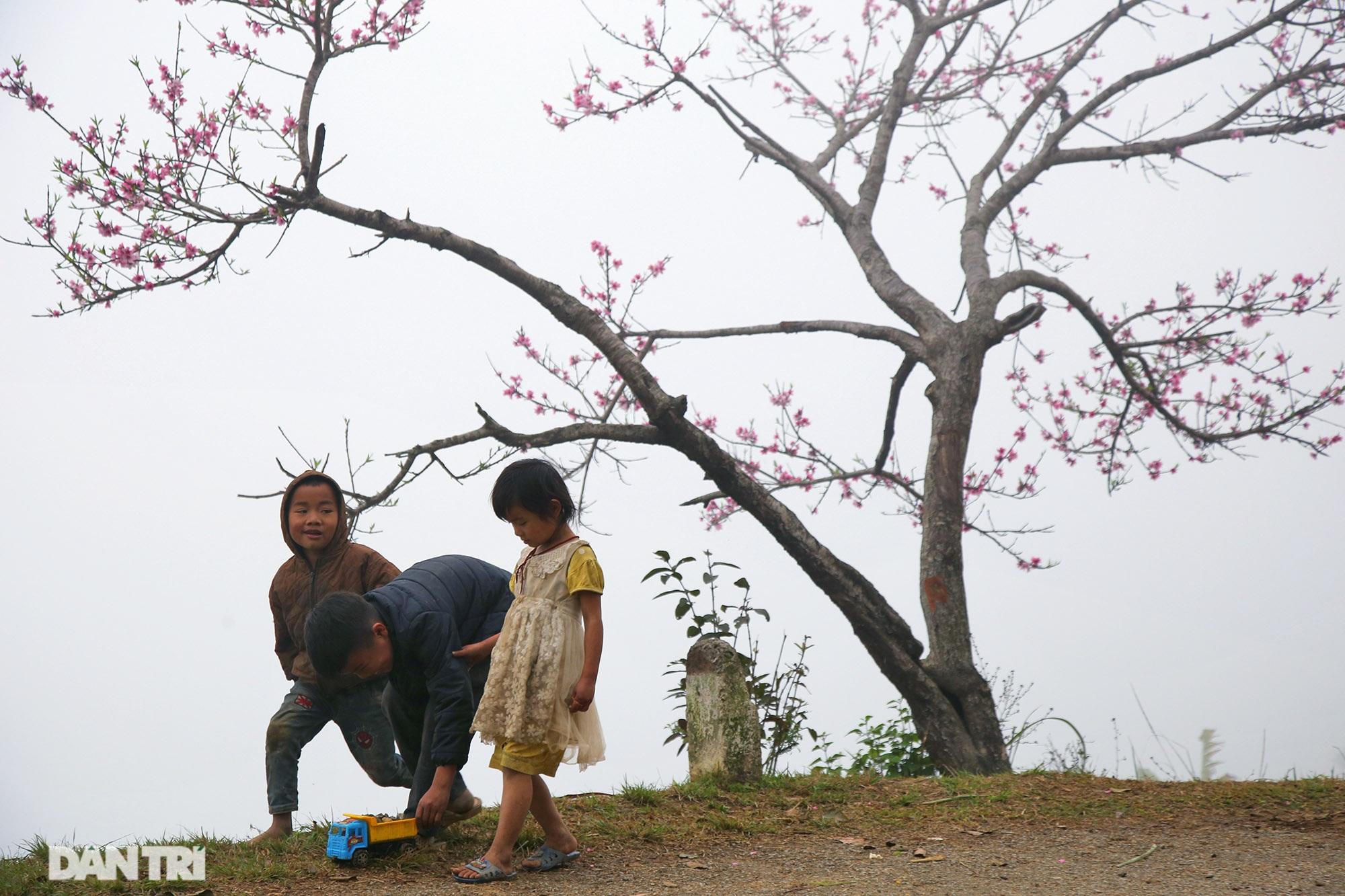Hoa đào, mận nở khắp mọi nẻo đường cao nguyên đá Đồng Văn - 5