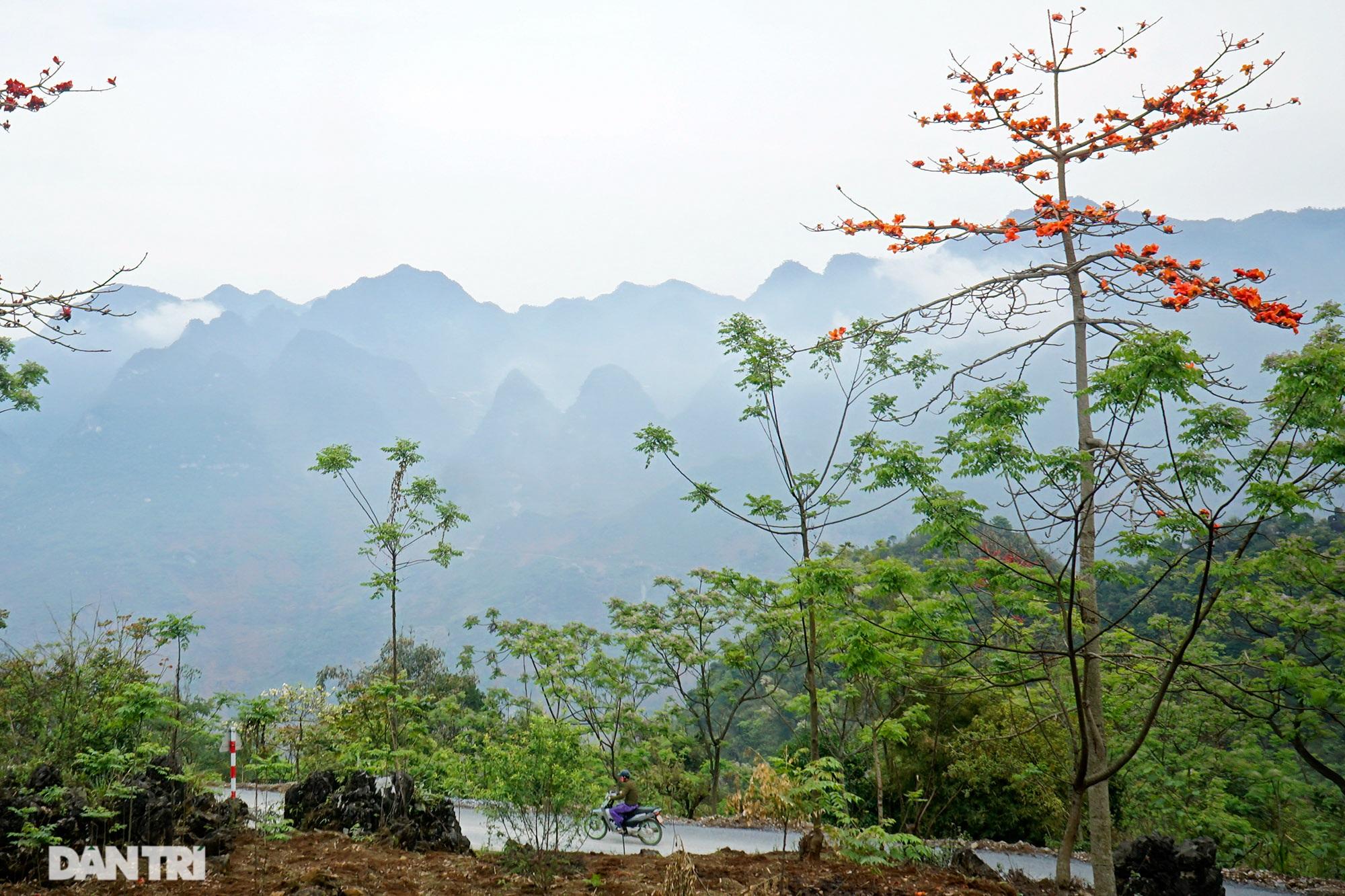 Hoa đào, mận nở khắp mọi nẻo đường cao nguyên đá Đồng Văn - 6