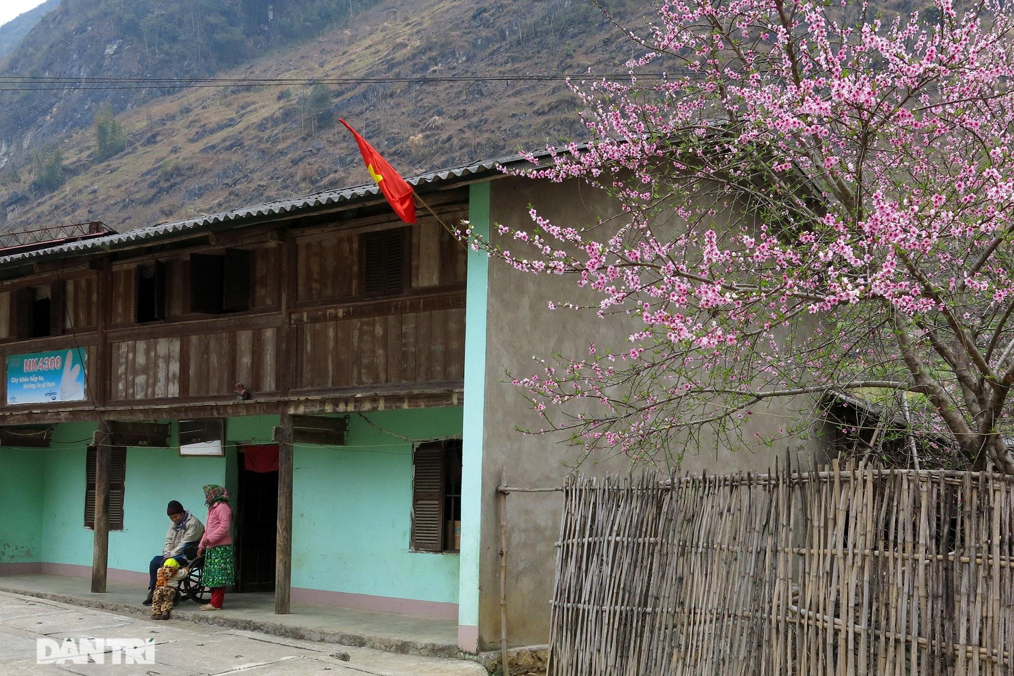 Hoa đào, mận nở khắp mọi nẻo đường cao nguyên đá Đồng Văn - 4