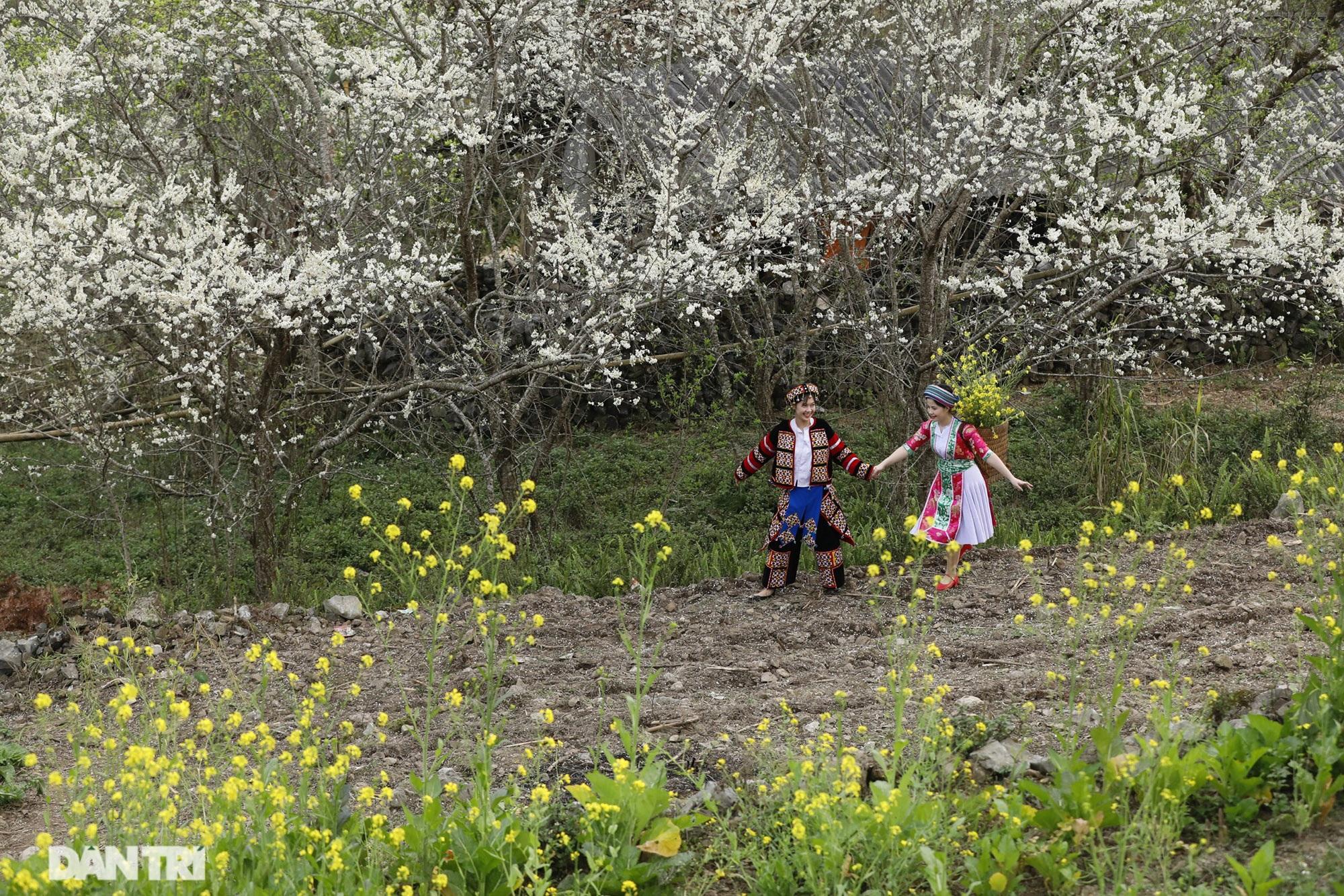 Hoa đào, mận nở khắp mọi nẻo đường cao nguyên đá Đồng Văn - 8