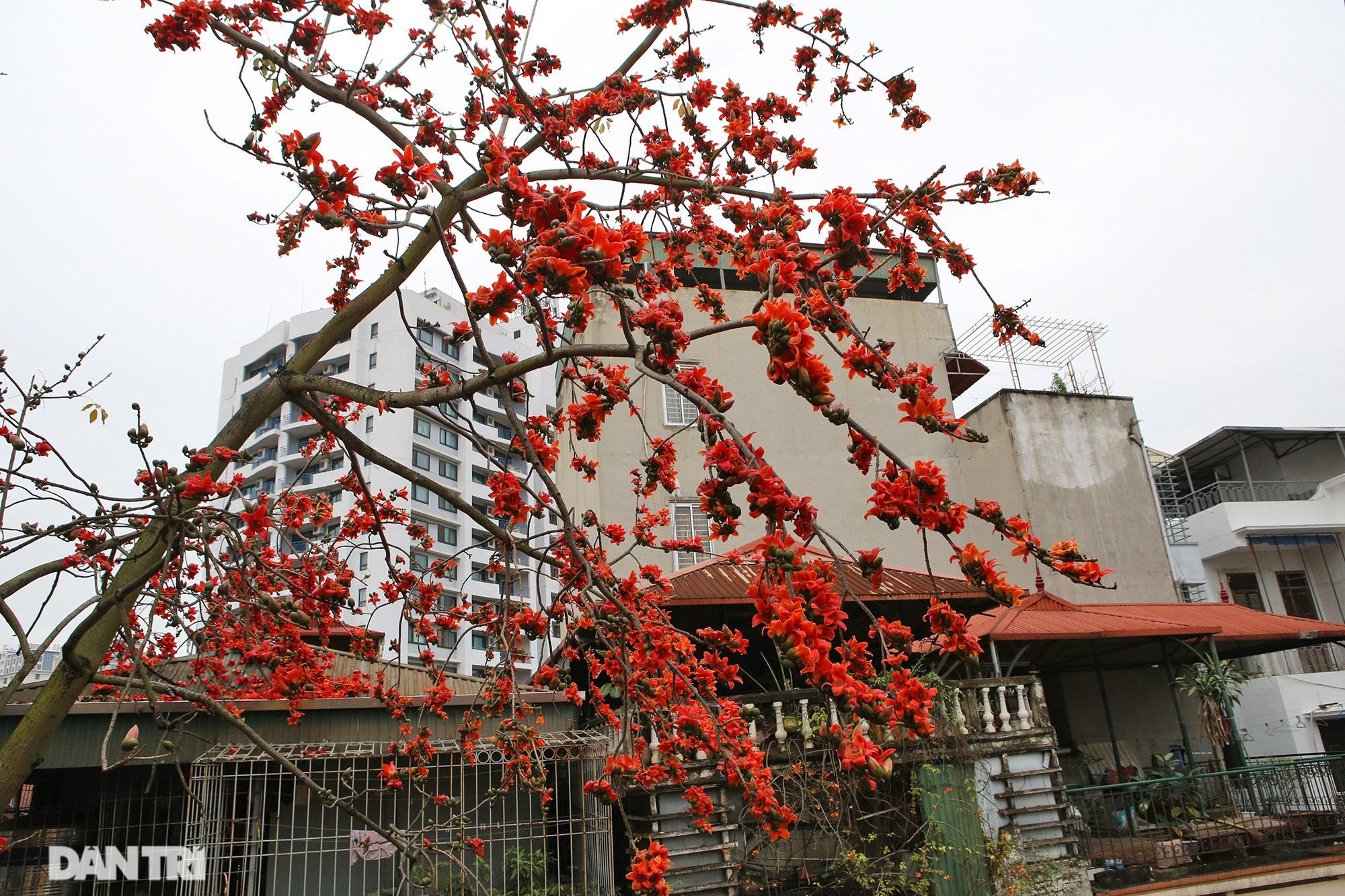 Mùa hoa gạo trong phố - 11