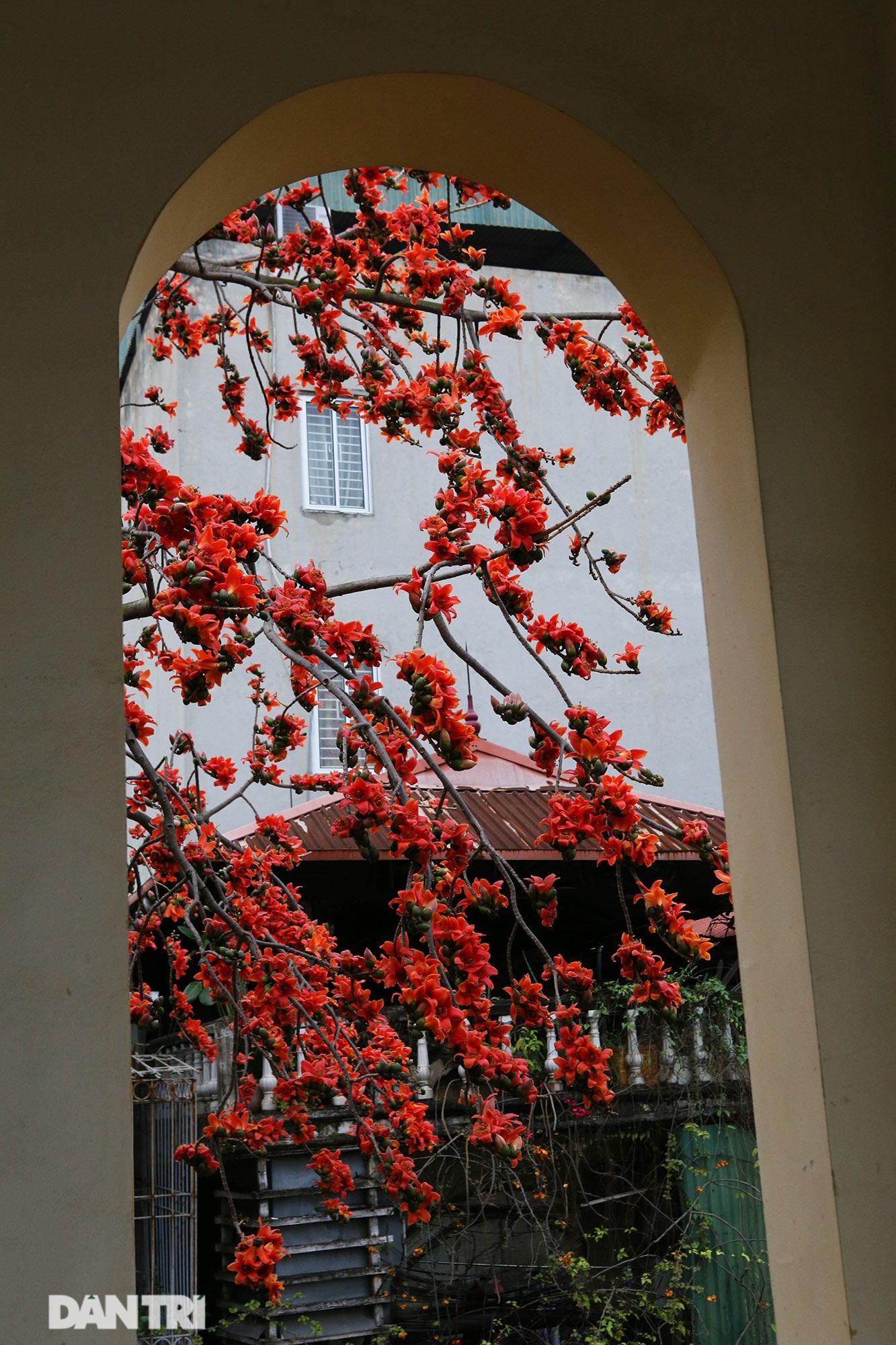 Mùa hoa gạo trong phố - 14