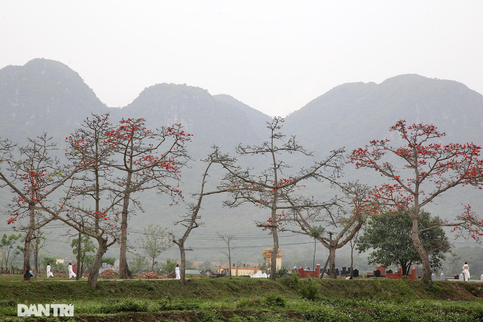 Hoa gạo nở đẹp sâu lắng vùng ngoại thành Hà Nội - 12