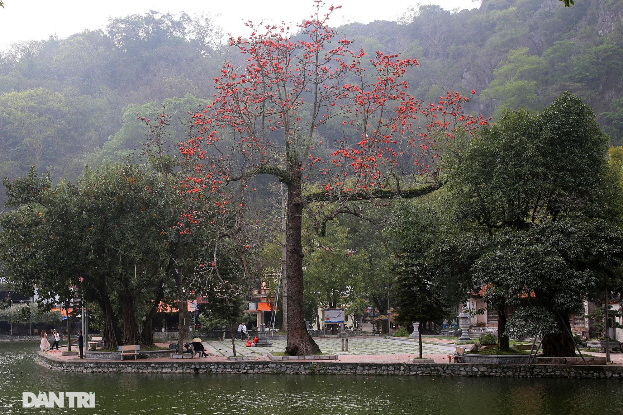 Hoa gạo nở đẹp sâu lắng vùng ngoại thành Hà Nội - 14