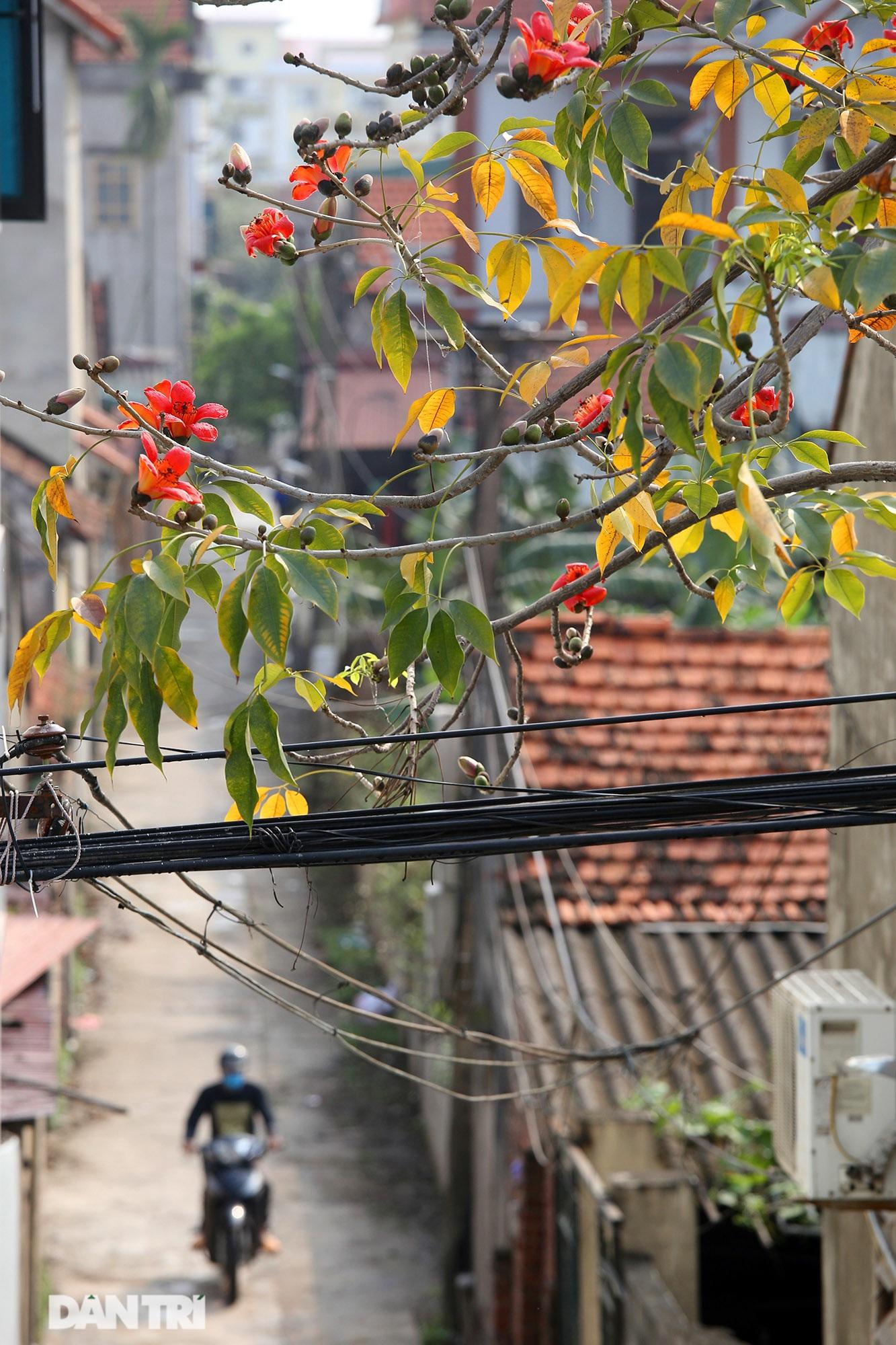 Hoa gạo nở đẹp sâu lắng vùng ngoại thành Hà Nội - 6