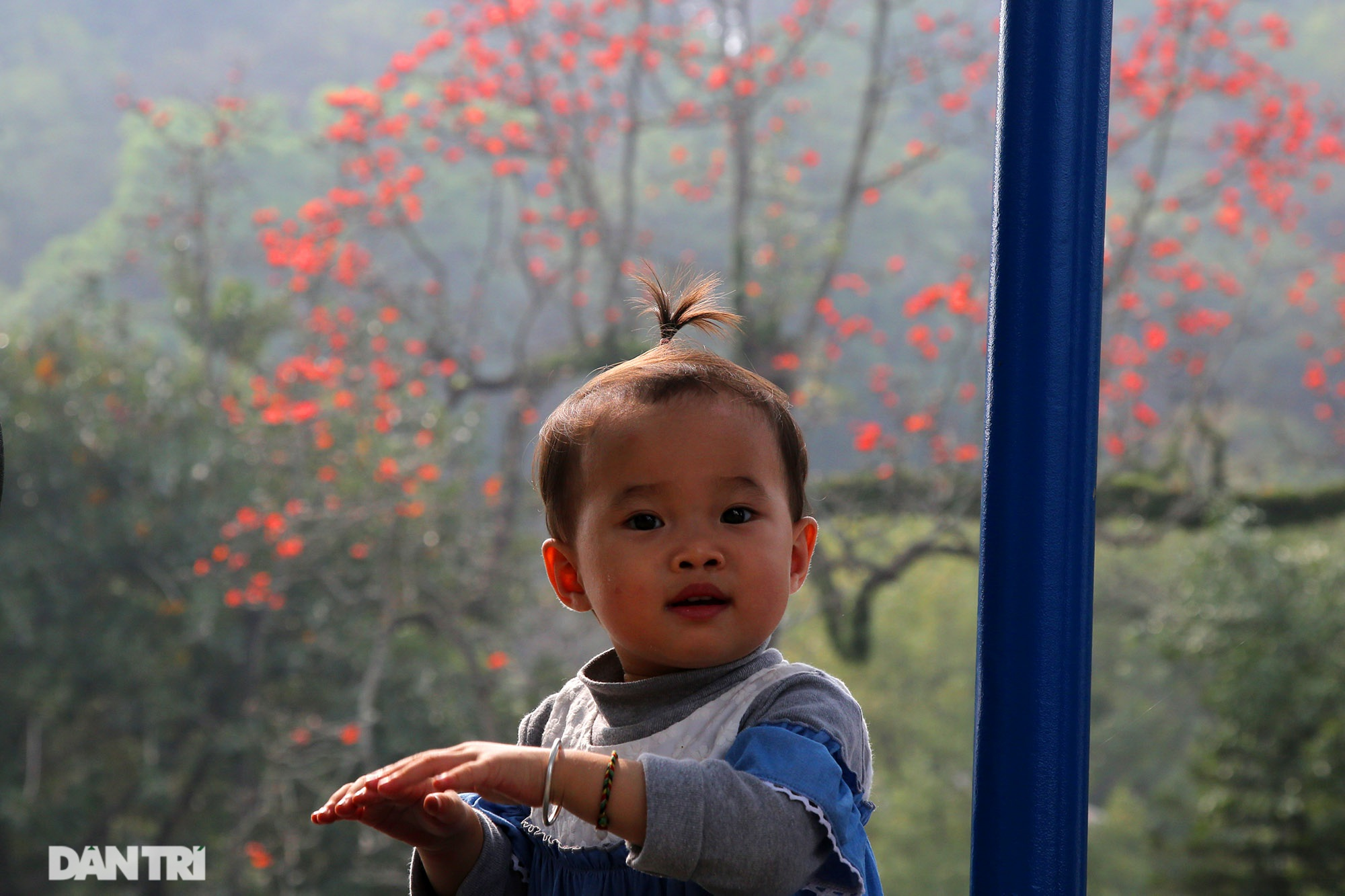 Hoa gạo nở đẹp sâu lắng vùng ngoại thành Hà Nội - 9