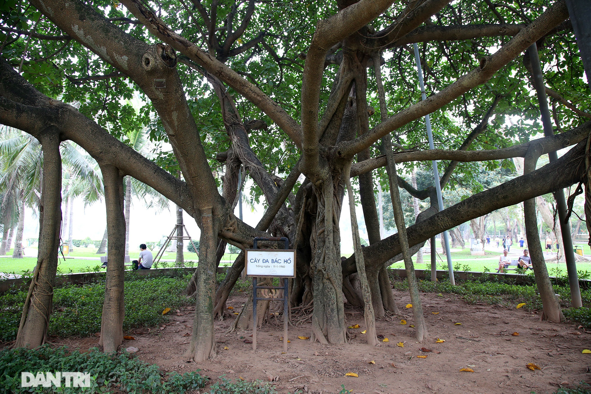 Những điều ít biết về Công viên rộng lớn nhất Hà Nội sắp tròn 60 năm tuổi - 12