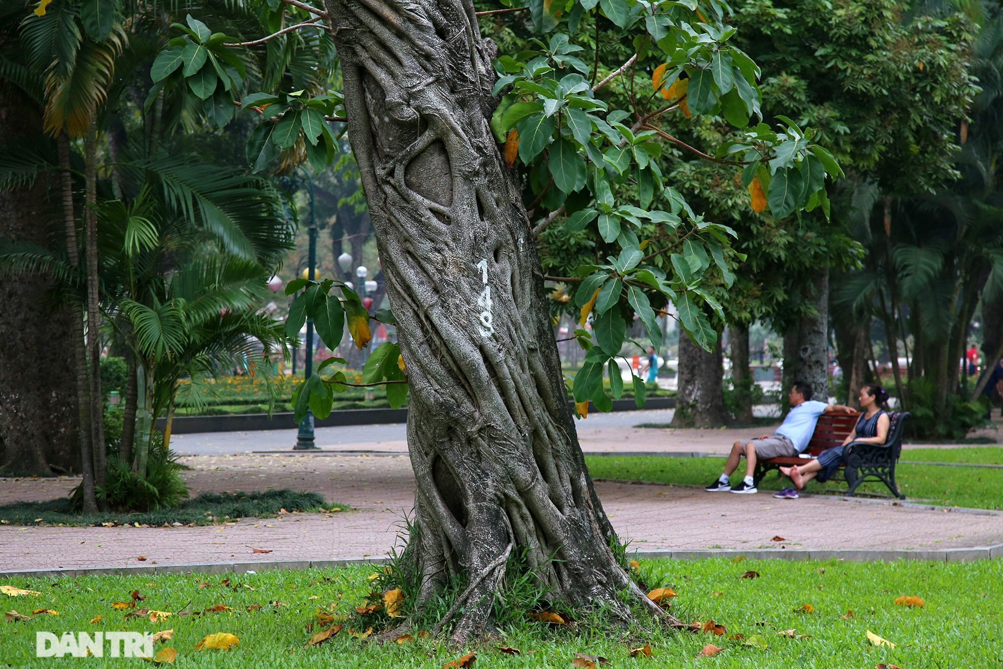 Little-known things about the largest park in Hanoi are about to turn 60 years old - 14 years old
