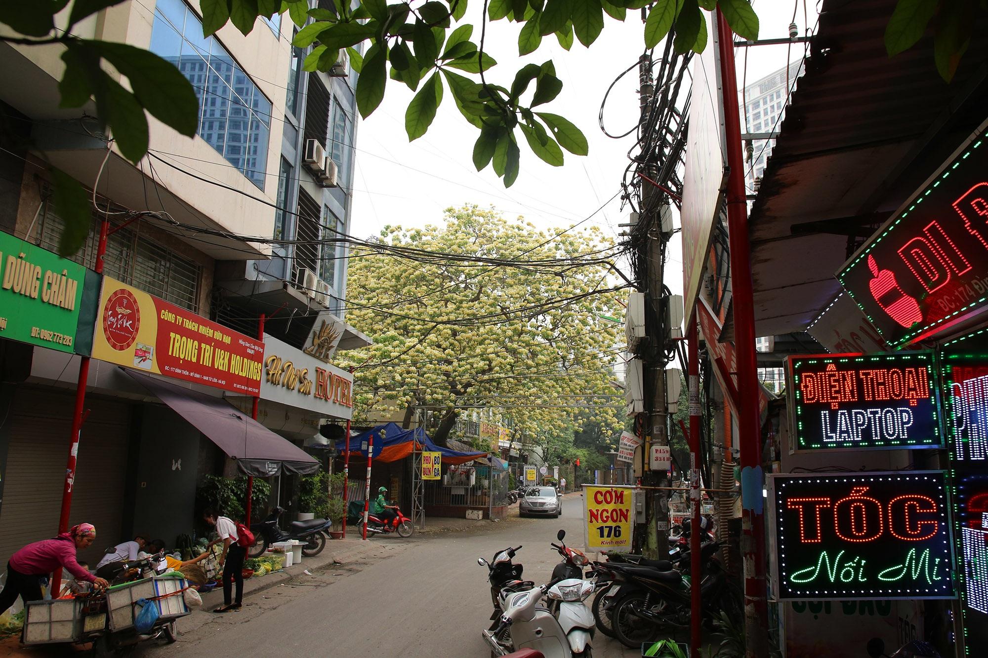 Cây hoa bún 300 tuổi ở Hà Nội thu hút người dân đổ về thưởng lãm - 9
