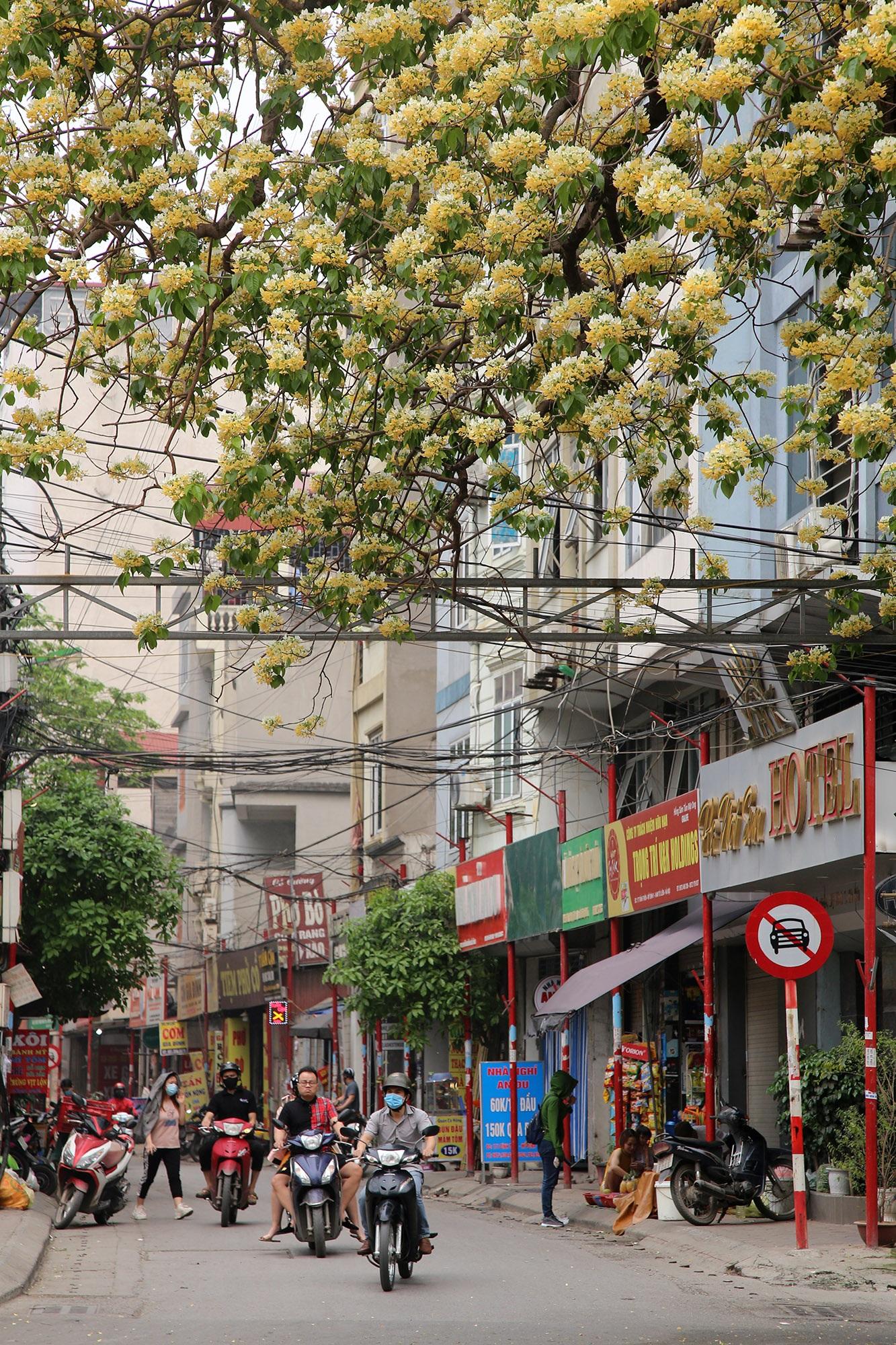 Cây hoa bún 300 tuổi ở Hà Nội thu hút người dân đổ về thưởng lãm - 10