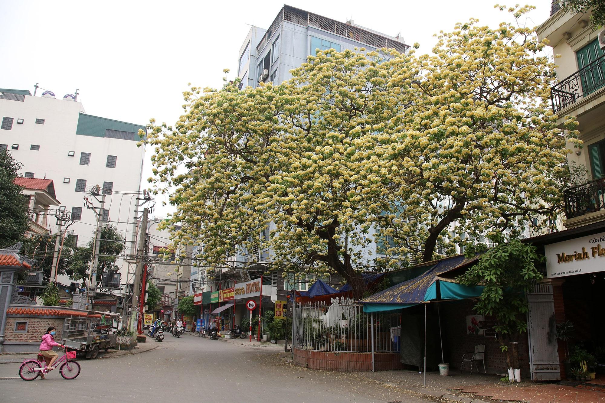 Cây hoa bún 300 tuổi ở Hà Nội thu hút người dân đổ về thưởng lãm - 12