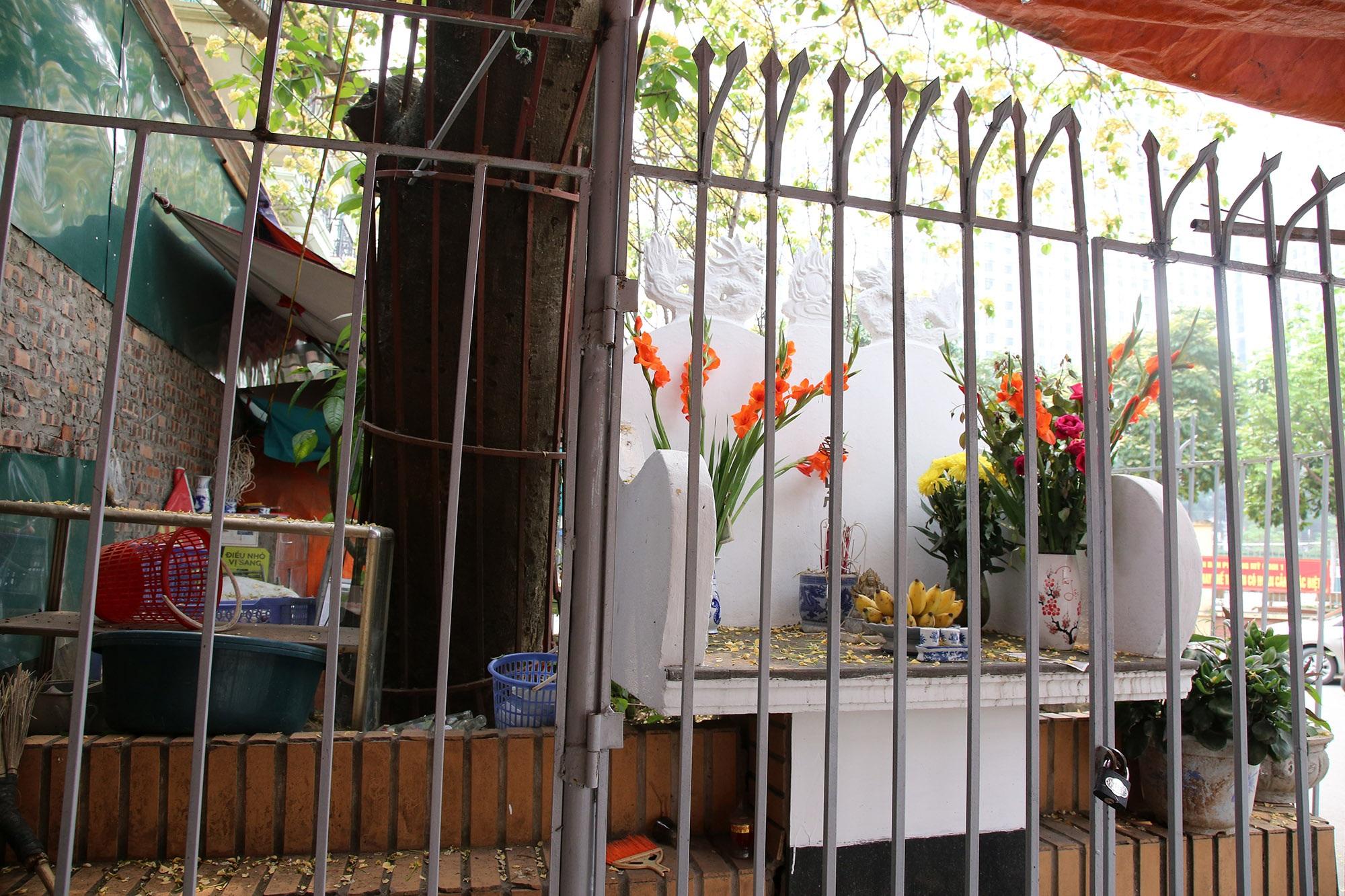 Cây hoa bún 300 tuổi ở Hà Nội thu hút người dân đổ về thưởng lãm - 8