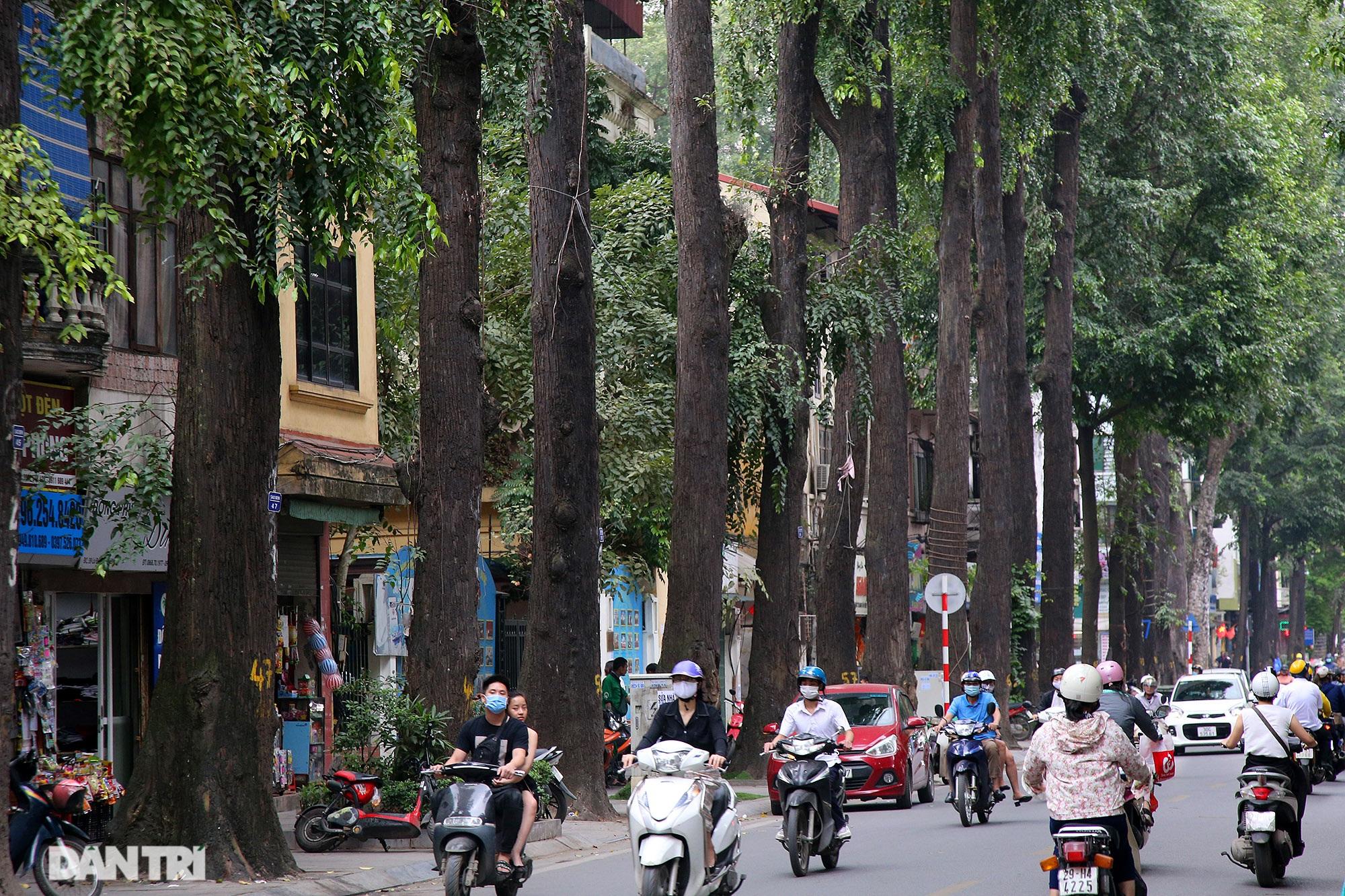 Những hàng cây xanh được quy hoạch hơn 100 năm trước ở Hà Nội giờ ra sao? - 1