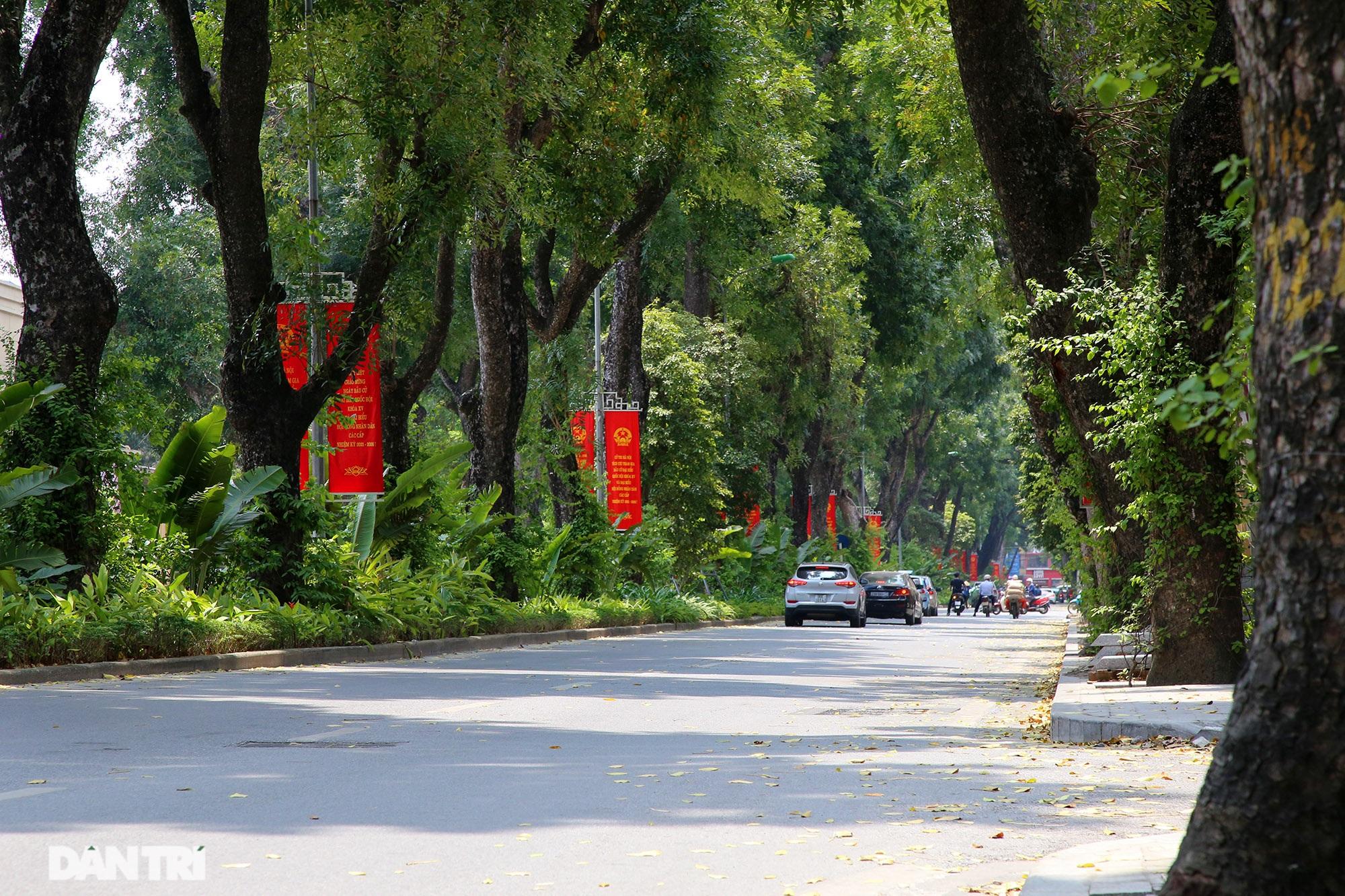 Những hàng cây xanh được quy hoạch hơn 100 năm trước ở Hà Nội giờ ra sao? - 12