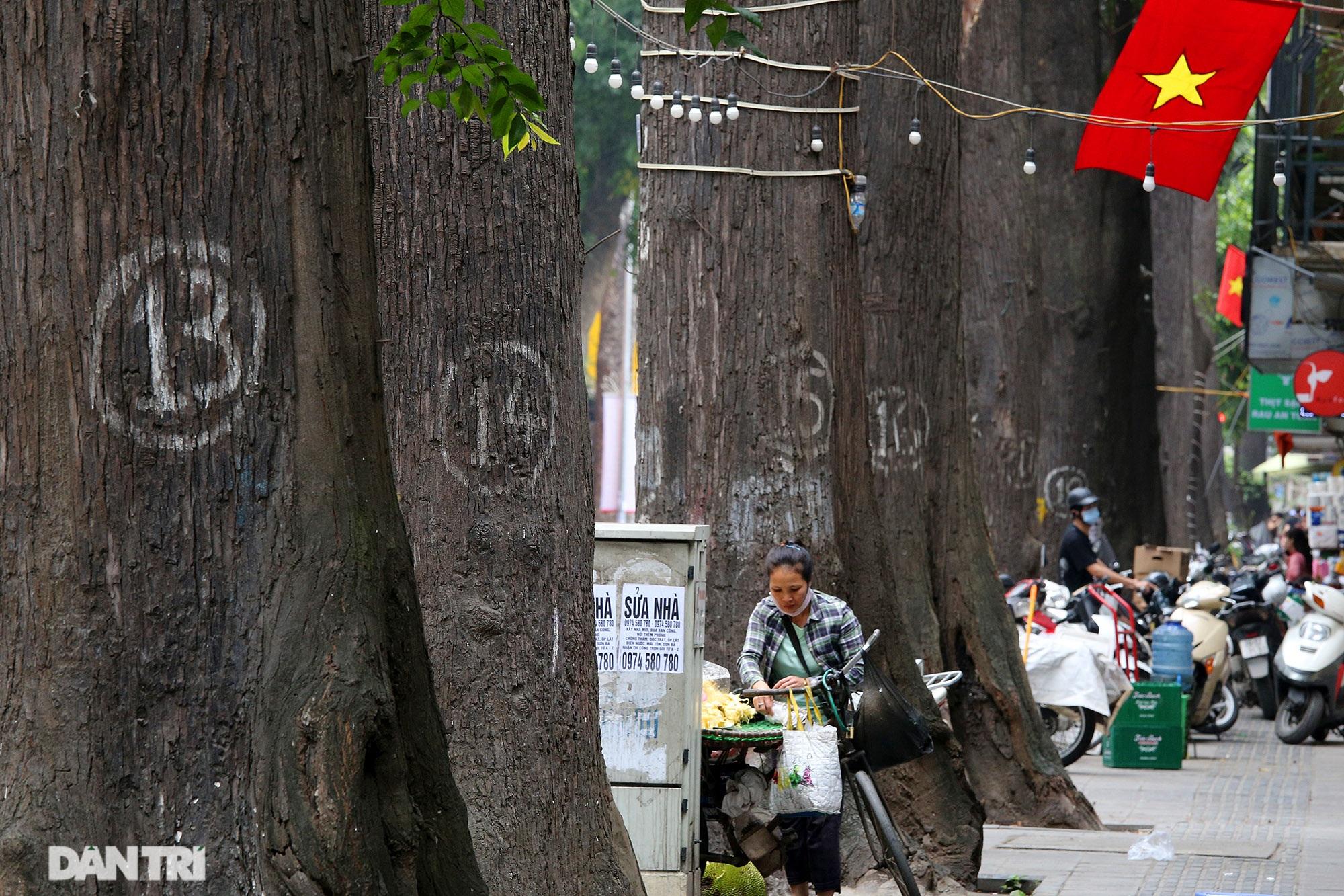 Những hàng cây xanh được quy hoạch hơn 100 năm trước ở Hà Nội giờ ra sao? - 3