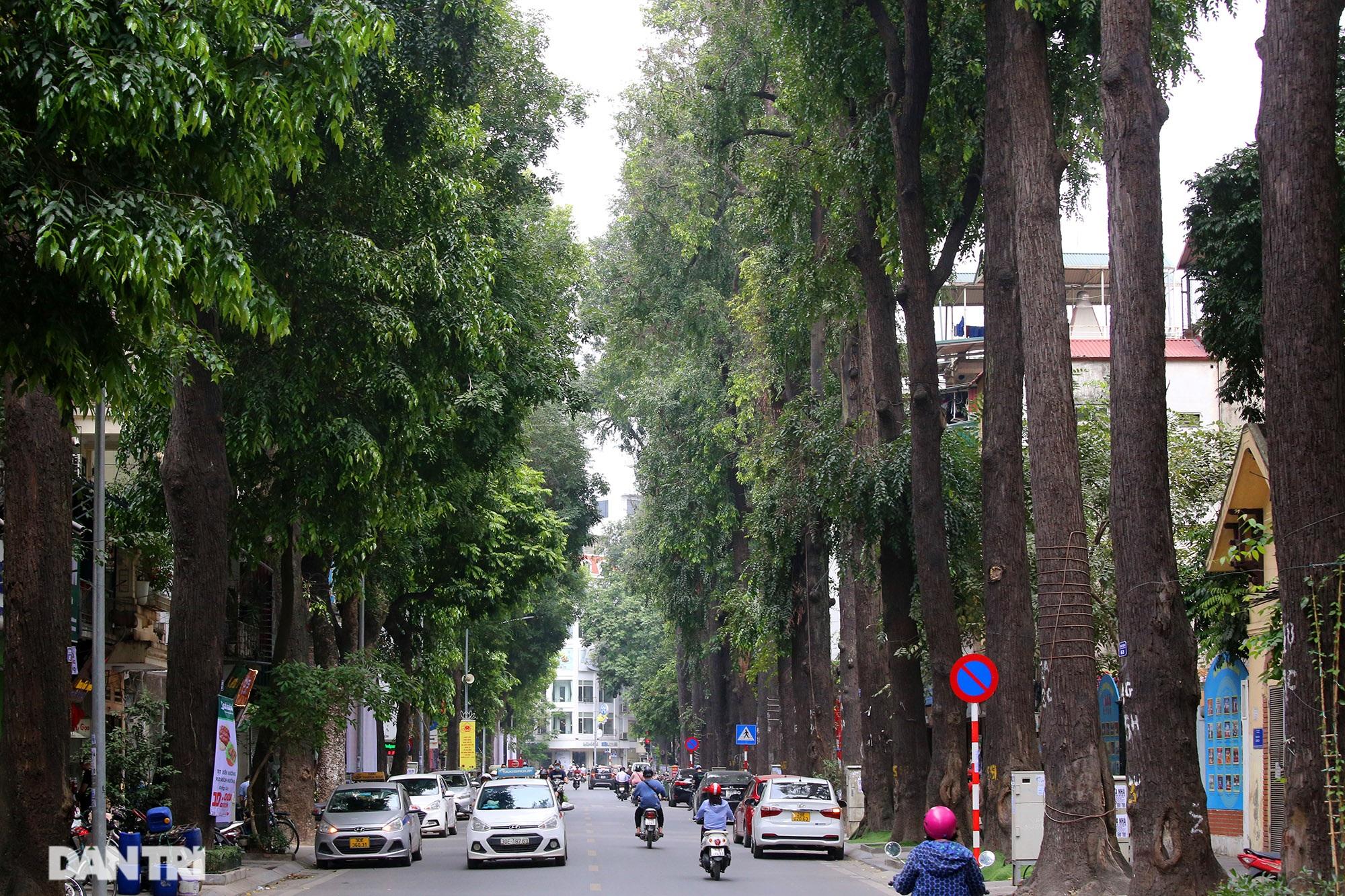 Những hàng cây xanh được quy hoạch hơn 100 năm trước ở Hà Nội giờ ra sao? - 5