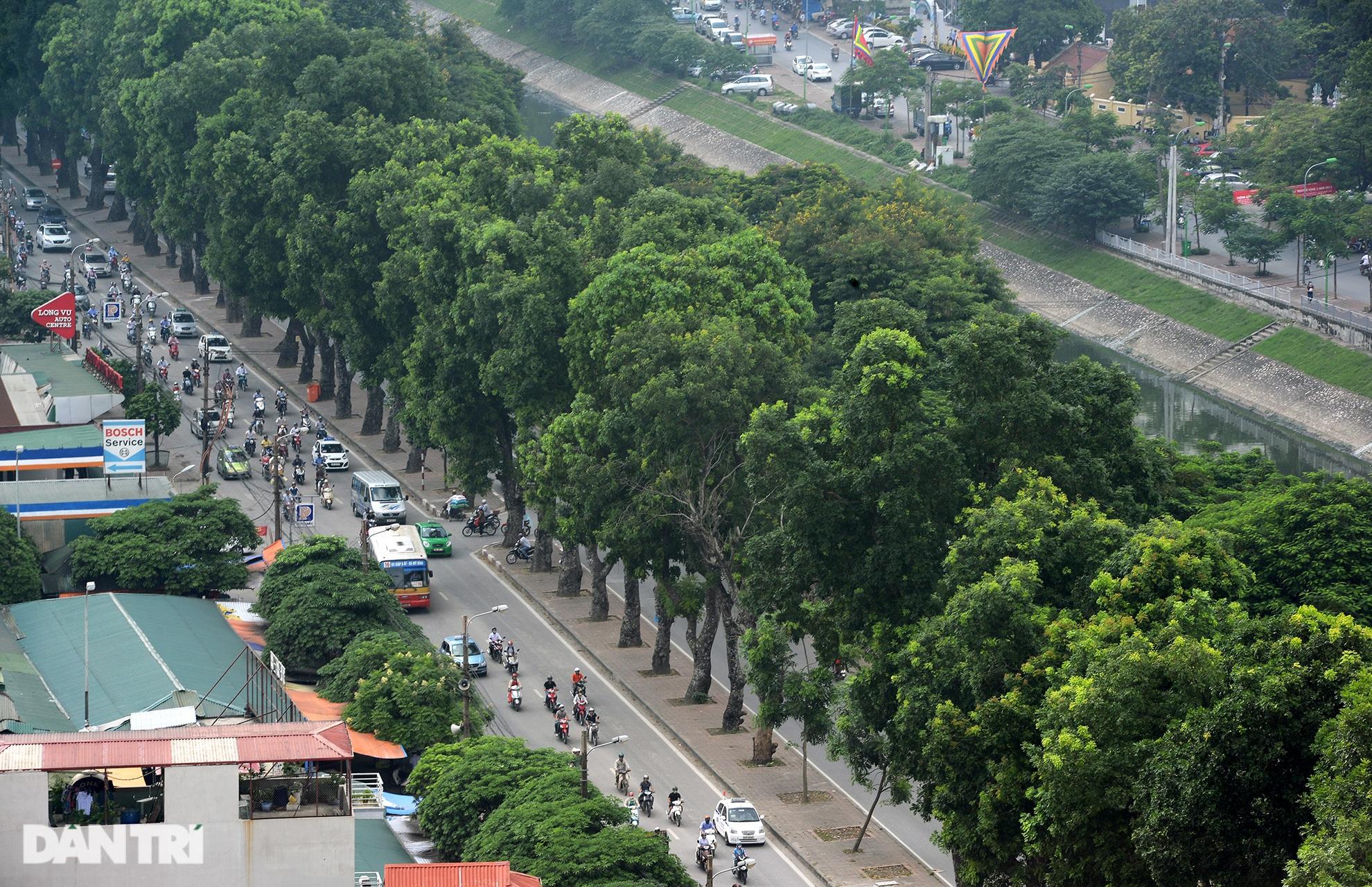 Những hàng cây xanh được quy hoạch hơn 100 năm trước ở Hà Nội giờ ra sao? - 13