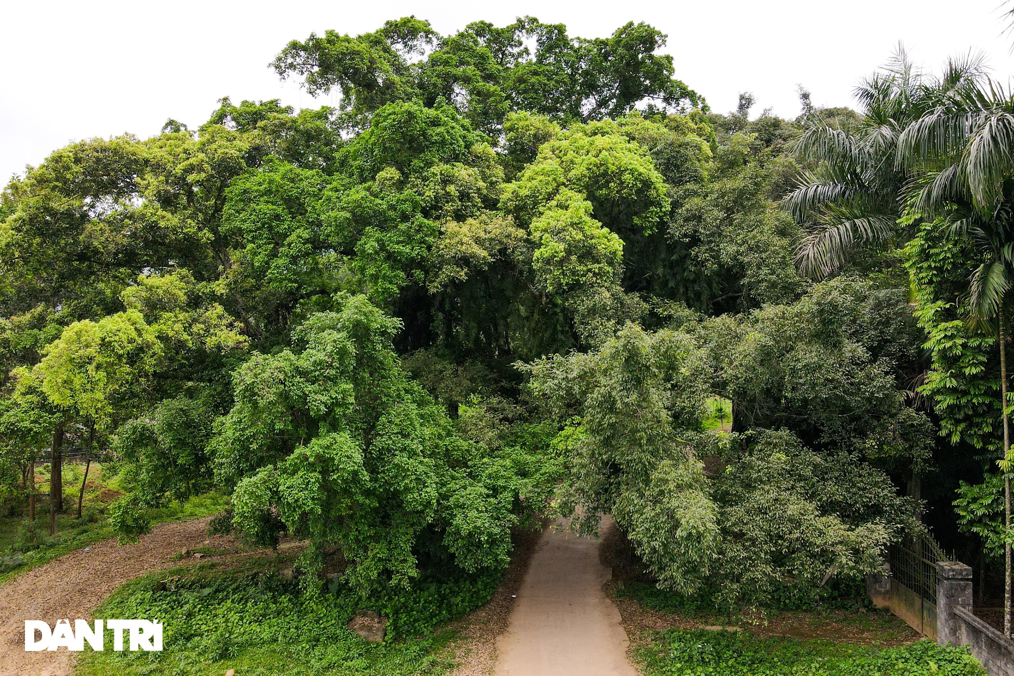 Tận mắt thấy cây ma làng tồn tại hơn 8 thế kỷ ở Hòa Bình - 10