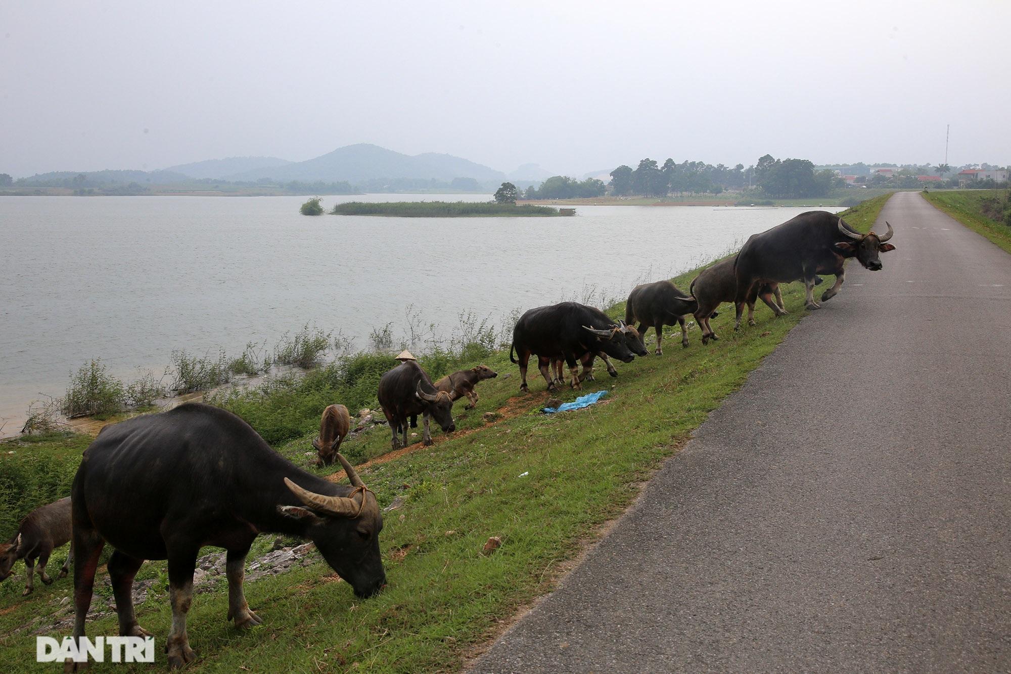 Dù có biển cấm tụ tập, hồ Đồng Mô vẫn tấp nập người đến cắm trại - 13