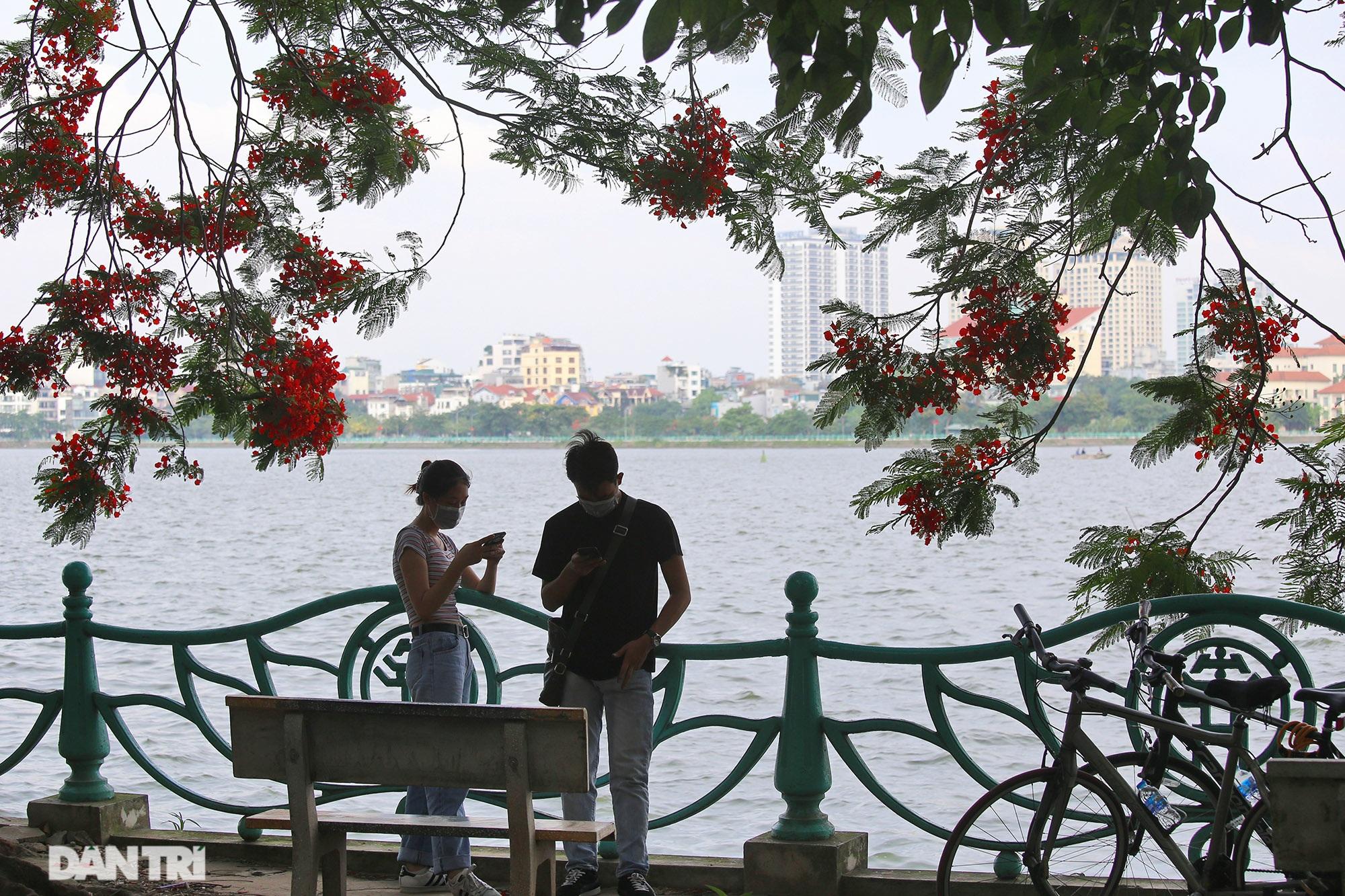 Mùa hoa phượng vĩ bắt đầu nở đẹp khắp phố phường Hà Nội - 1