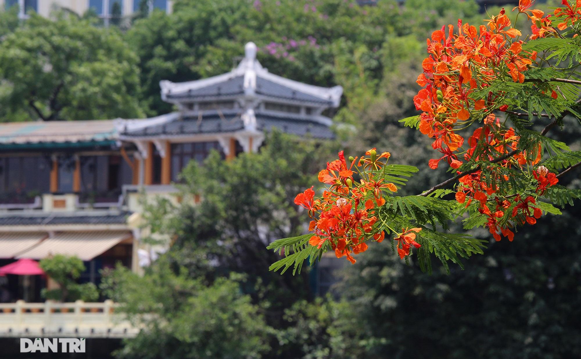 Mùa hoa phượng vĩ bắt đầu nở đẹp khắp phố phường Hà Nội - 11