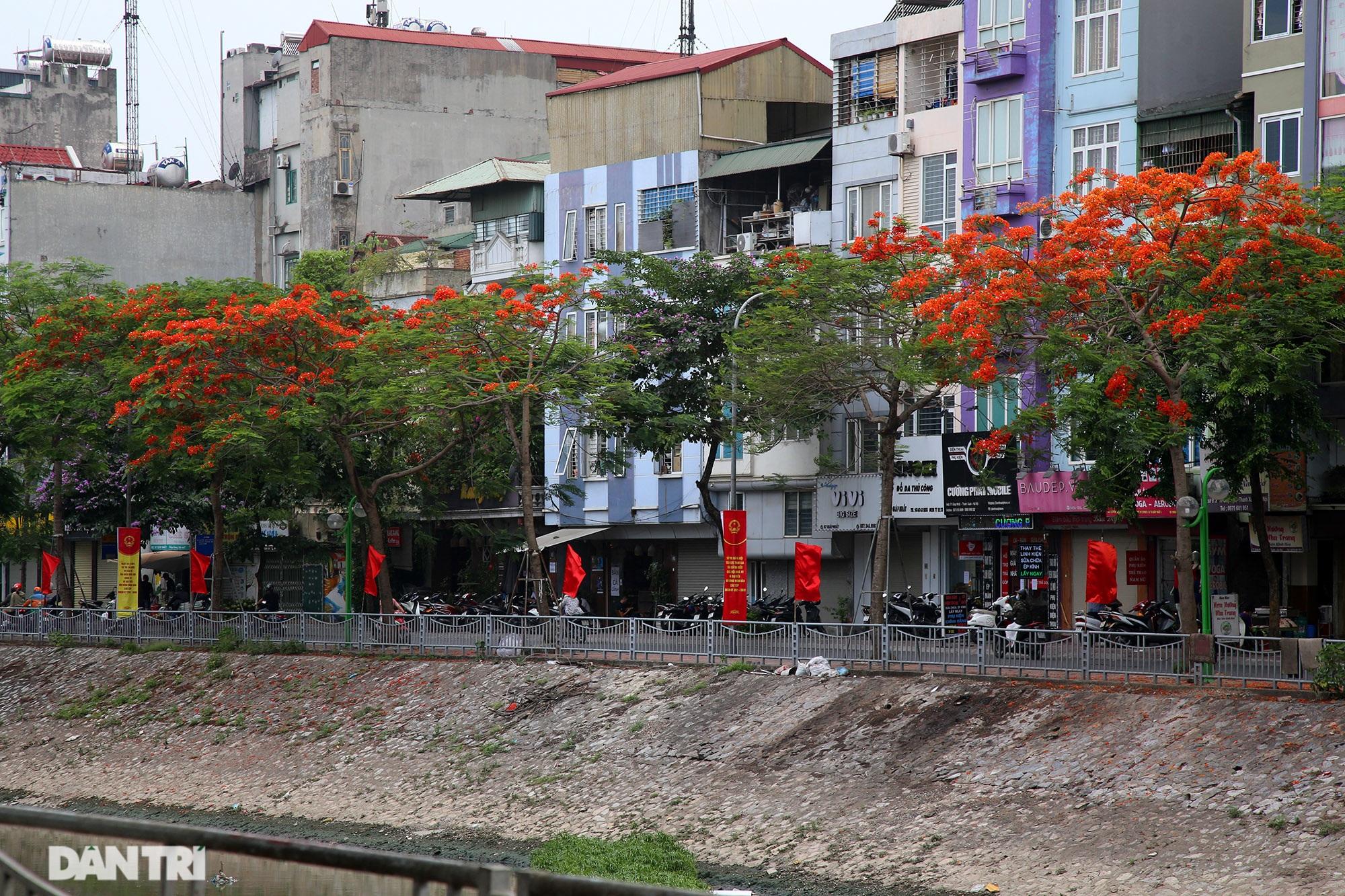 Mùa hoa phượng vĩ bắt đầu nở đẹp khắp phố phường Hà Nội - 15