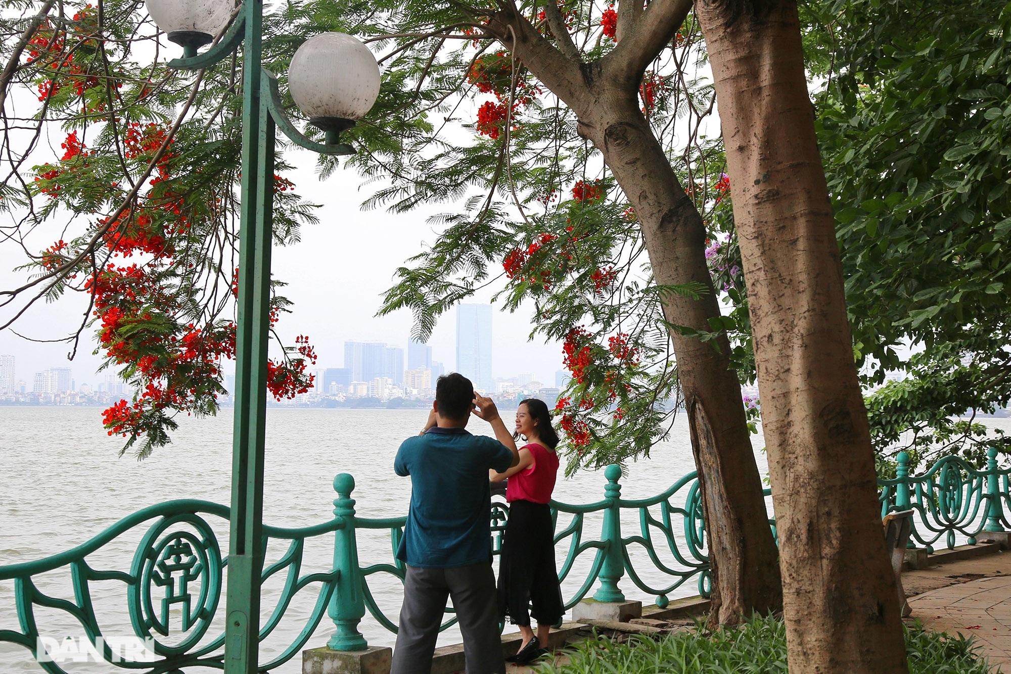 Mùa hoa phượng vĩ bắt đầu nở đẹp khắp phố phường Hà Nội - 3