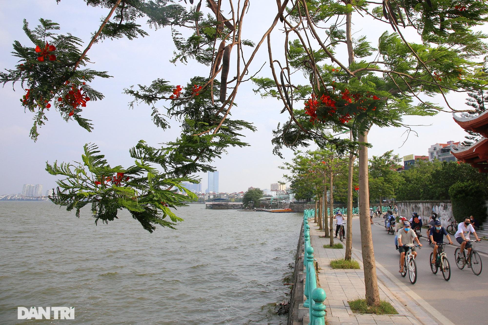Mùa hoa phượng vĩ bắt đầu nở đẹp khắp phố phường Hà Nội - 4