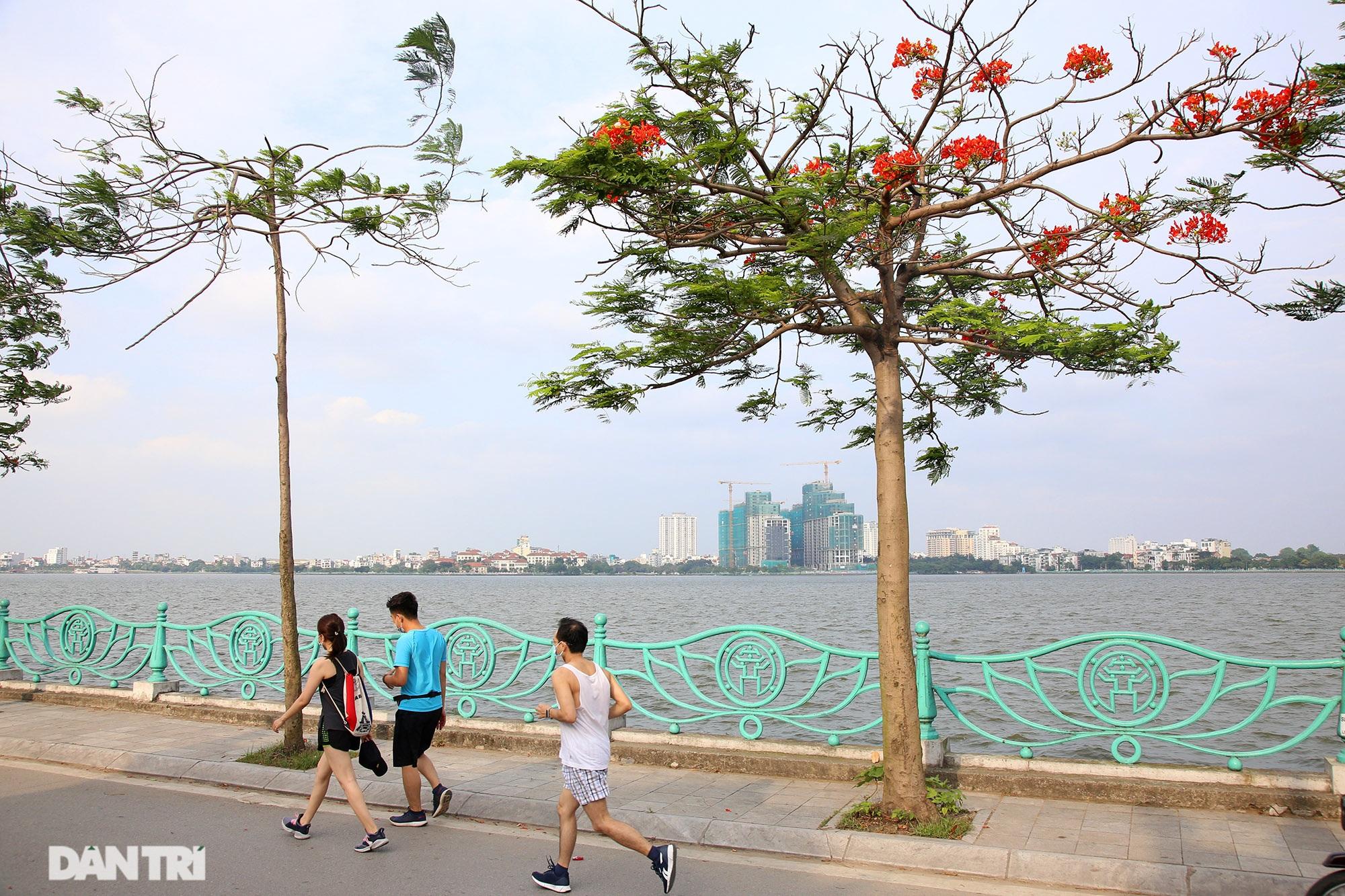Mùa hoa phượng vĩ bắt đầu nở đẹp khắp phố phường Hà Nội - 5