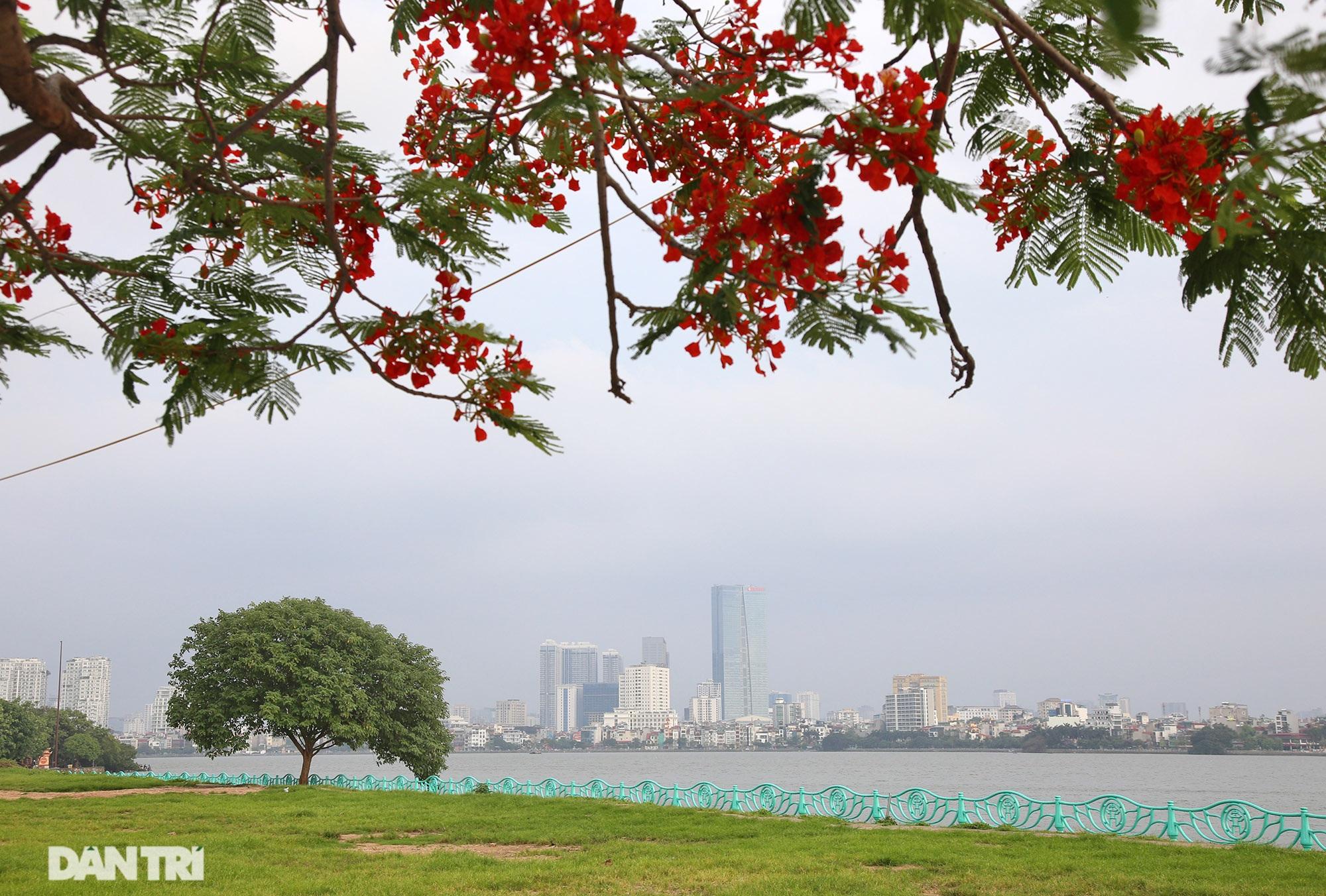 Mùa hoa phượng vĩ bắt đầu nở đẹp khắp phố phường Hà Nội - 6