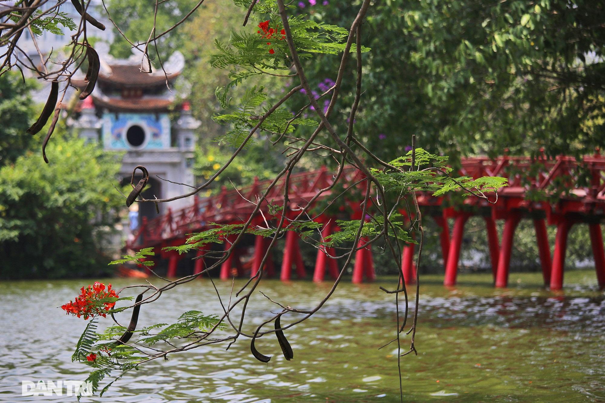 Mùa hoa phượng vĩ bắt đầu nở đẹp khắp phố phường Hà Nội - 9