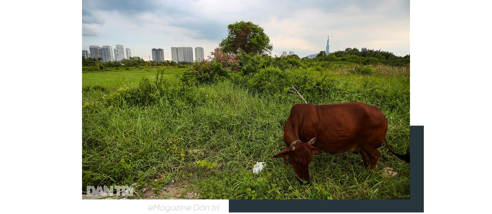 Mong ước nối 2 thế kỷ của dân sống ven con rạch khủng khiếp nhất Sài Gòn - 15