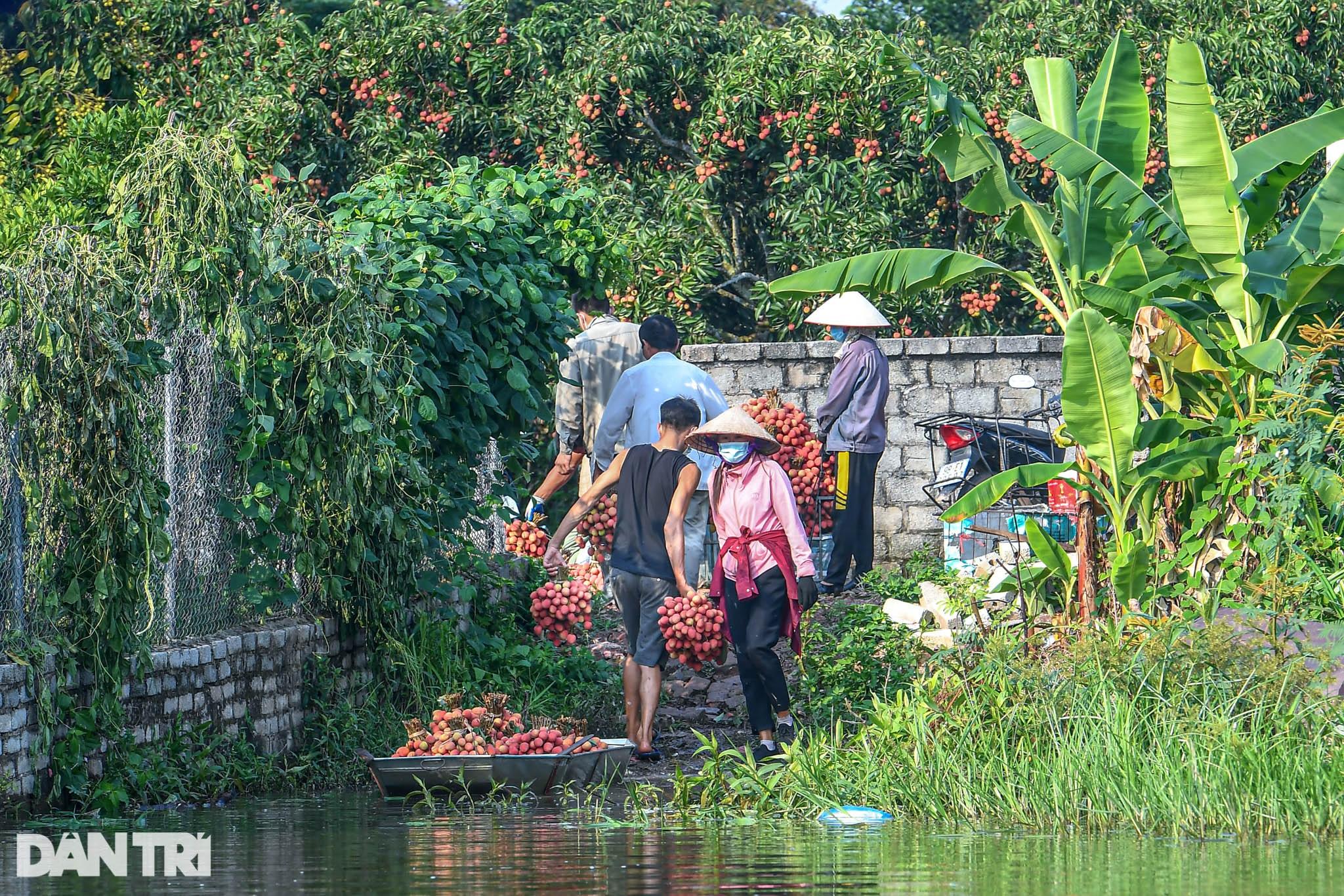 Công an huyện Lục Ngạn leo đồi, đi thuyền giúp nông dân thu hoạch vải - 18