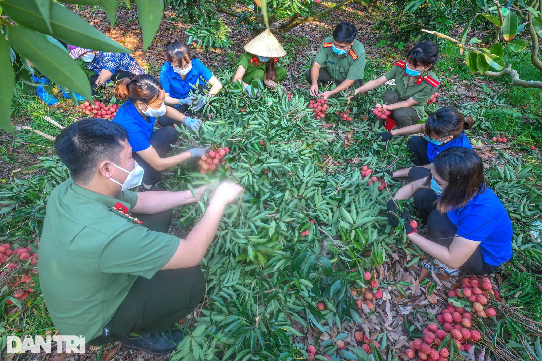 Công an huyện Lục Ngạn leo đồi, đi thuyền giúp nông dân thu hoạch vải - 2