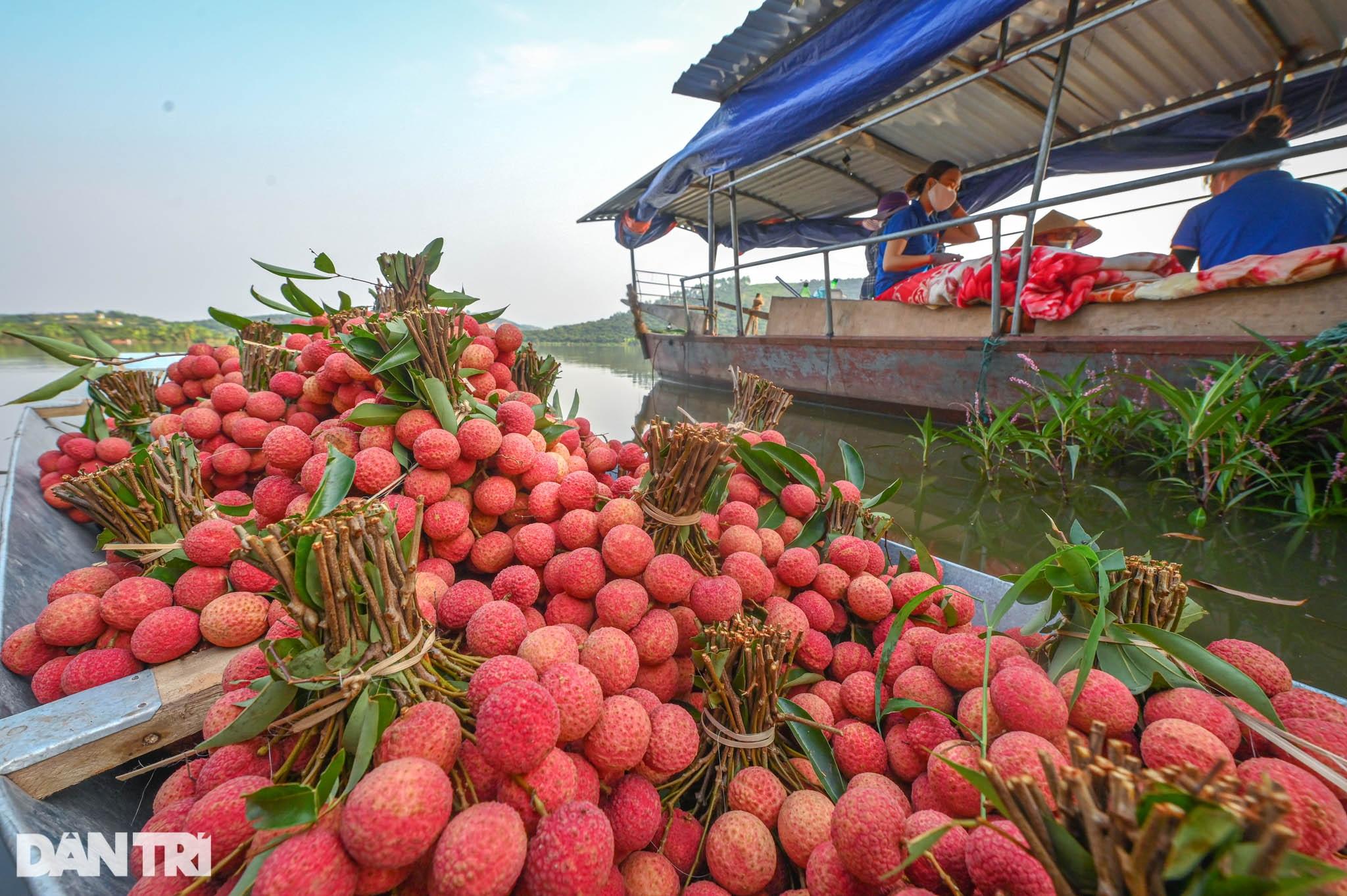 Công an huyện Lục Ngạn leo đồi, đi thuyền giúp nông dân thu hoạch vải - 15