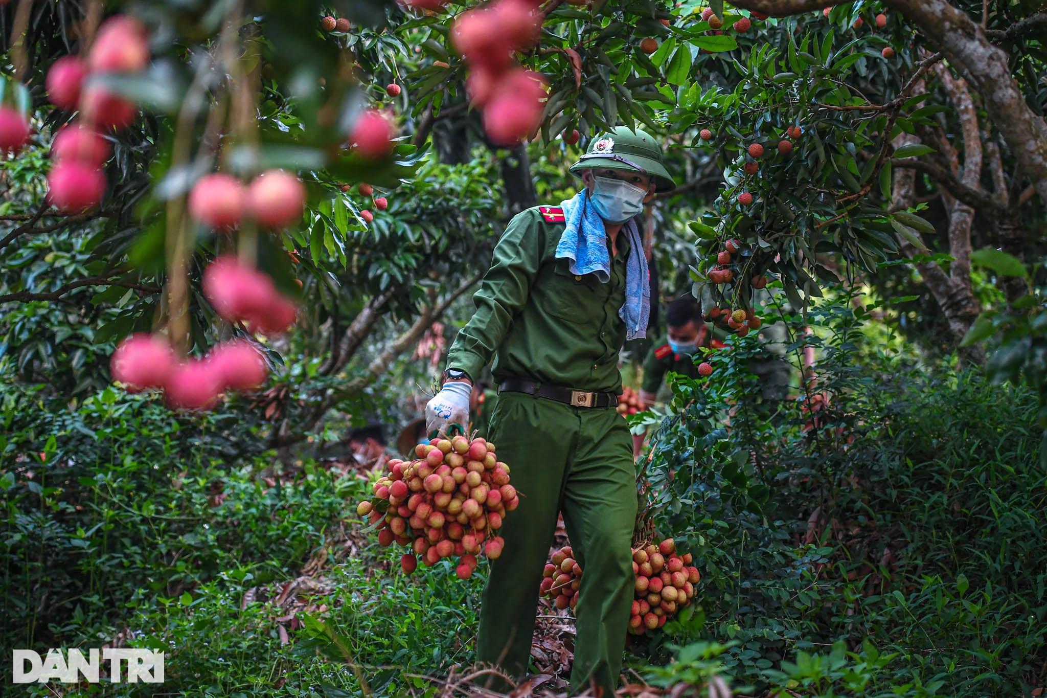 Công an huyện Lục Ngạn leo đồi, đi thuyền giúp nông dân thu hoạch vải - 7