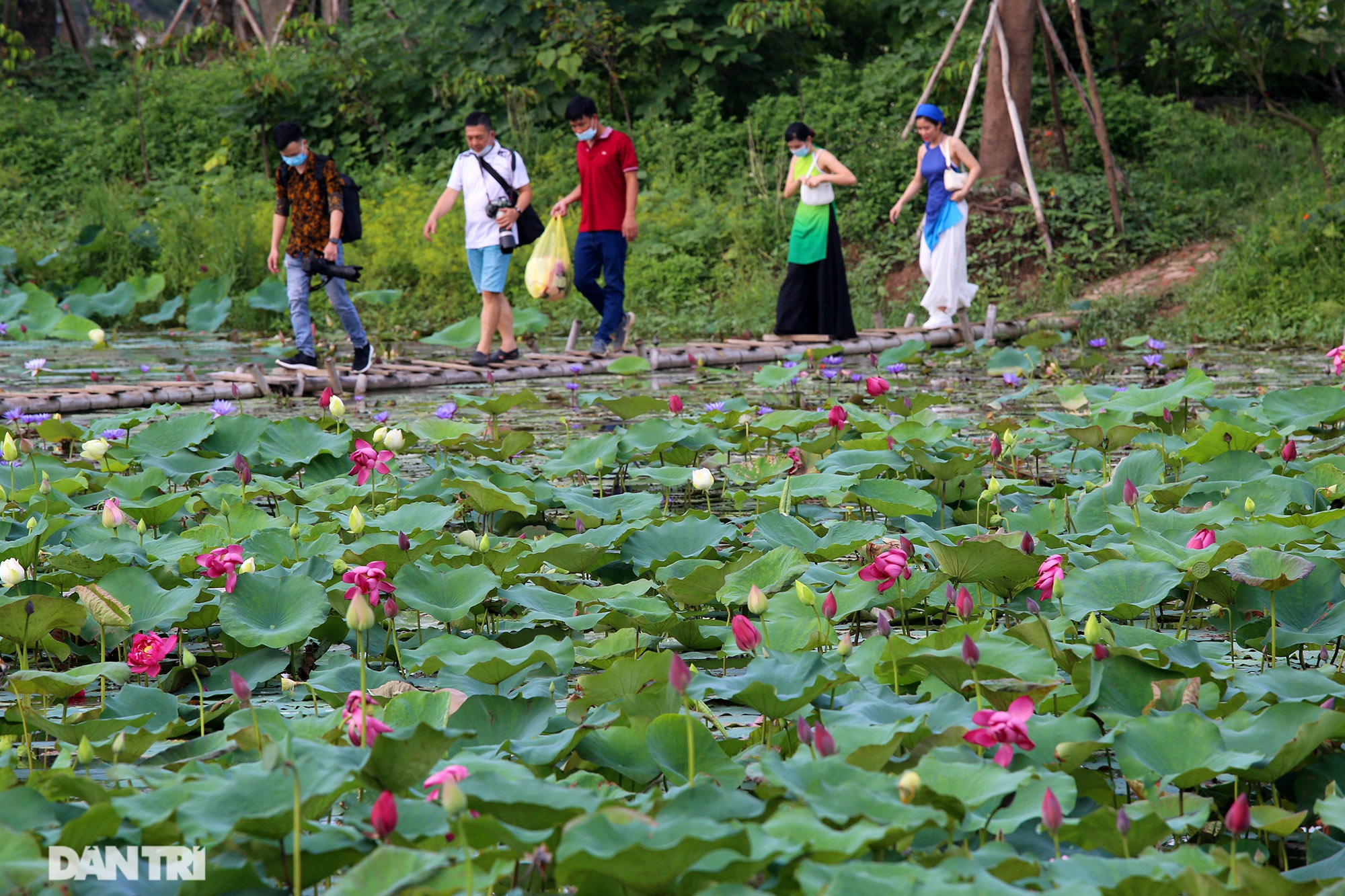 Thăm đầm sen ở Hà Nội có đến 167 loài, đa dạng nhất Việt Nam - 1