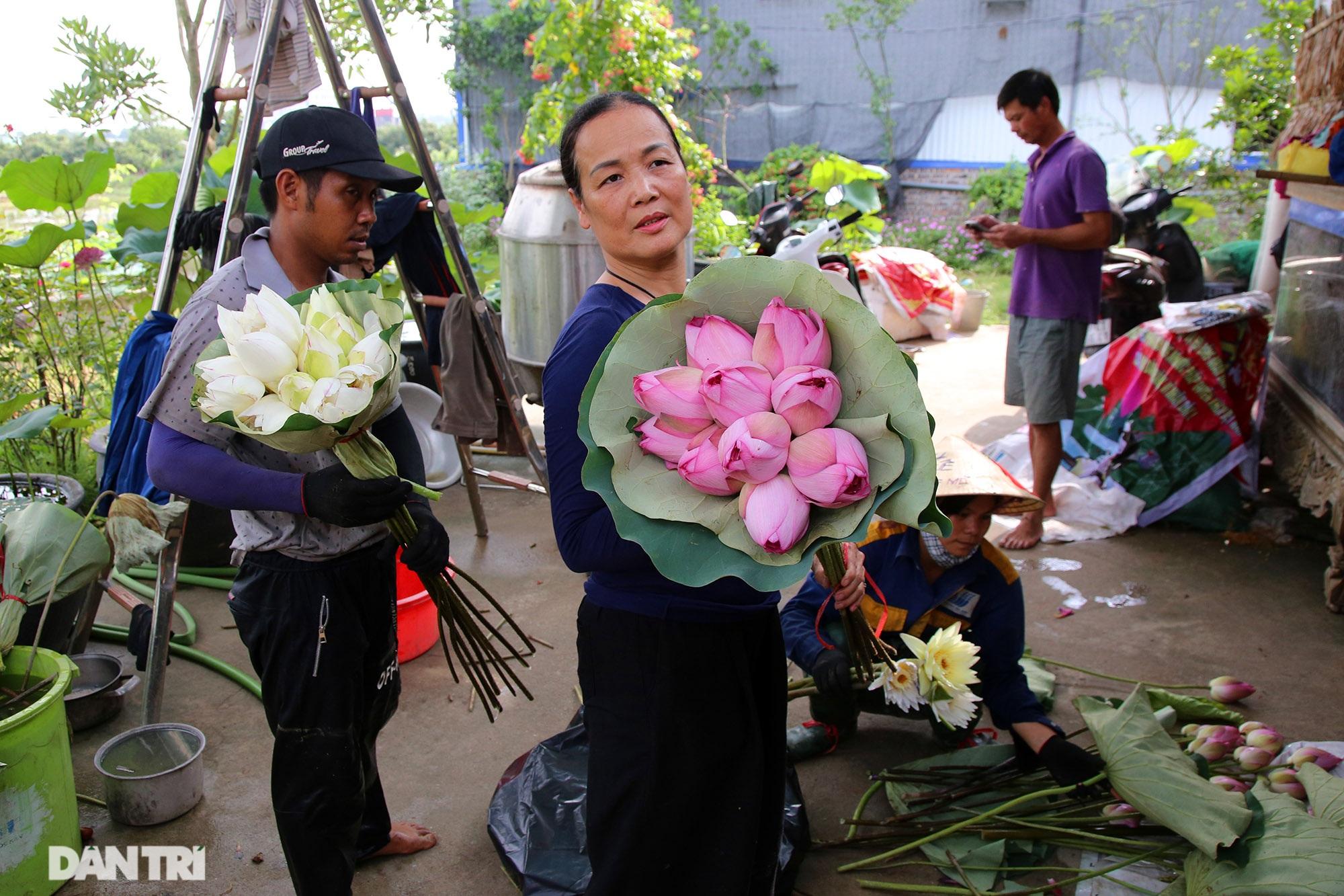 Thăm đầm sen ở Hà Nội có đến 167 loài, đa dạng nhất Việt Nam - 3