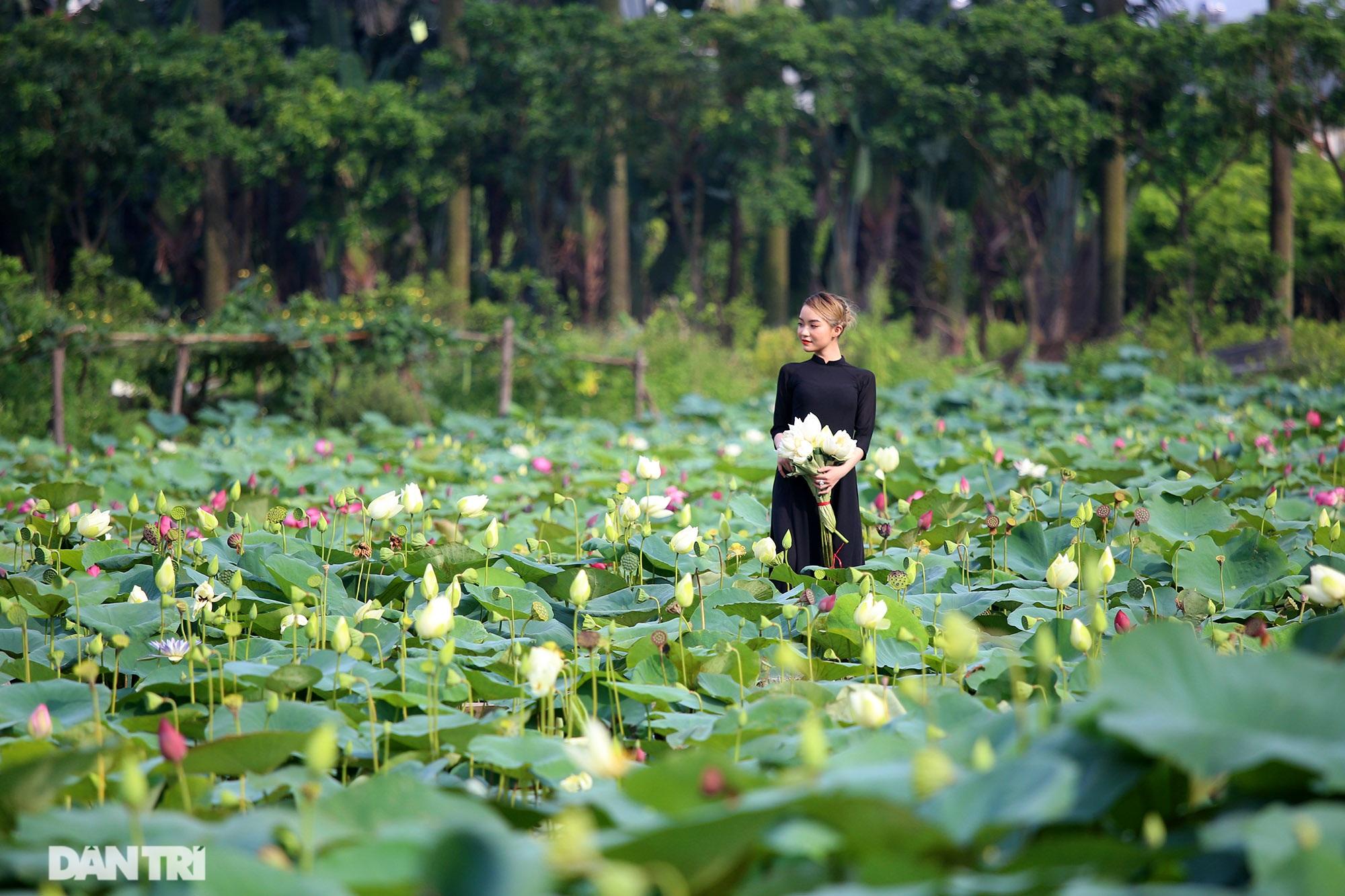 Thăm đầm sen ở Hà Nội có đến 167 loài, đa dạng nhất Việt Nam - 8
