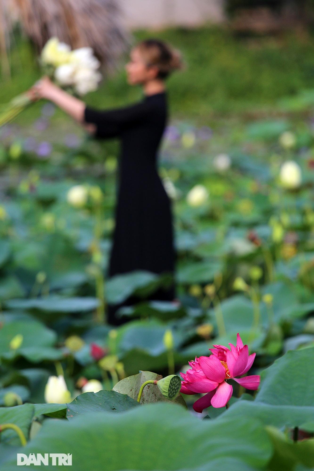Thăm đầm sen ở Hà Nội có đến 167 loài, đa dạng nhất Việt Nam - 10