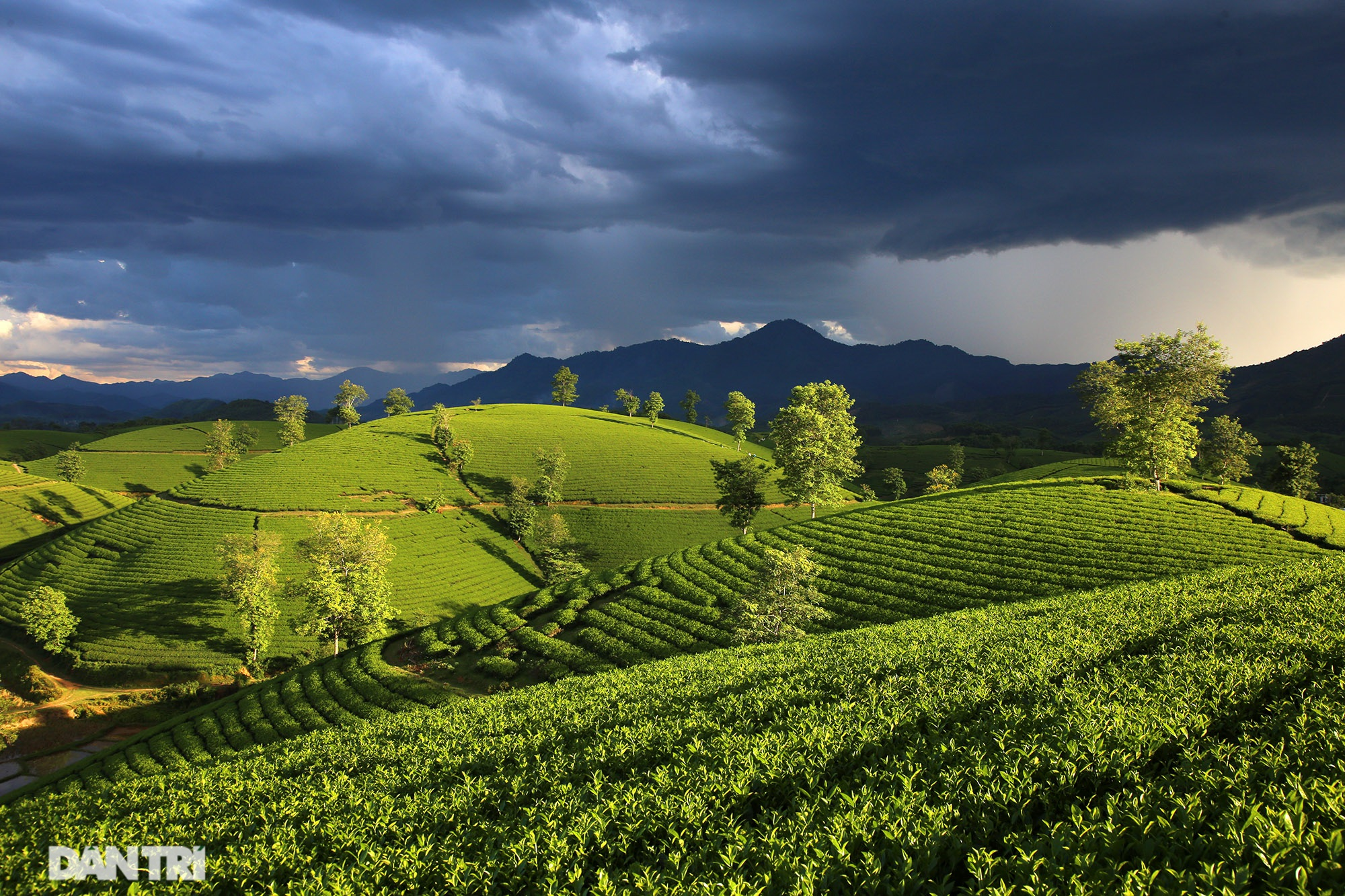 The stunning scenery of Long Coc tea hills in Phu Tho - 1