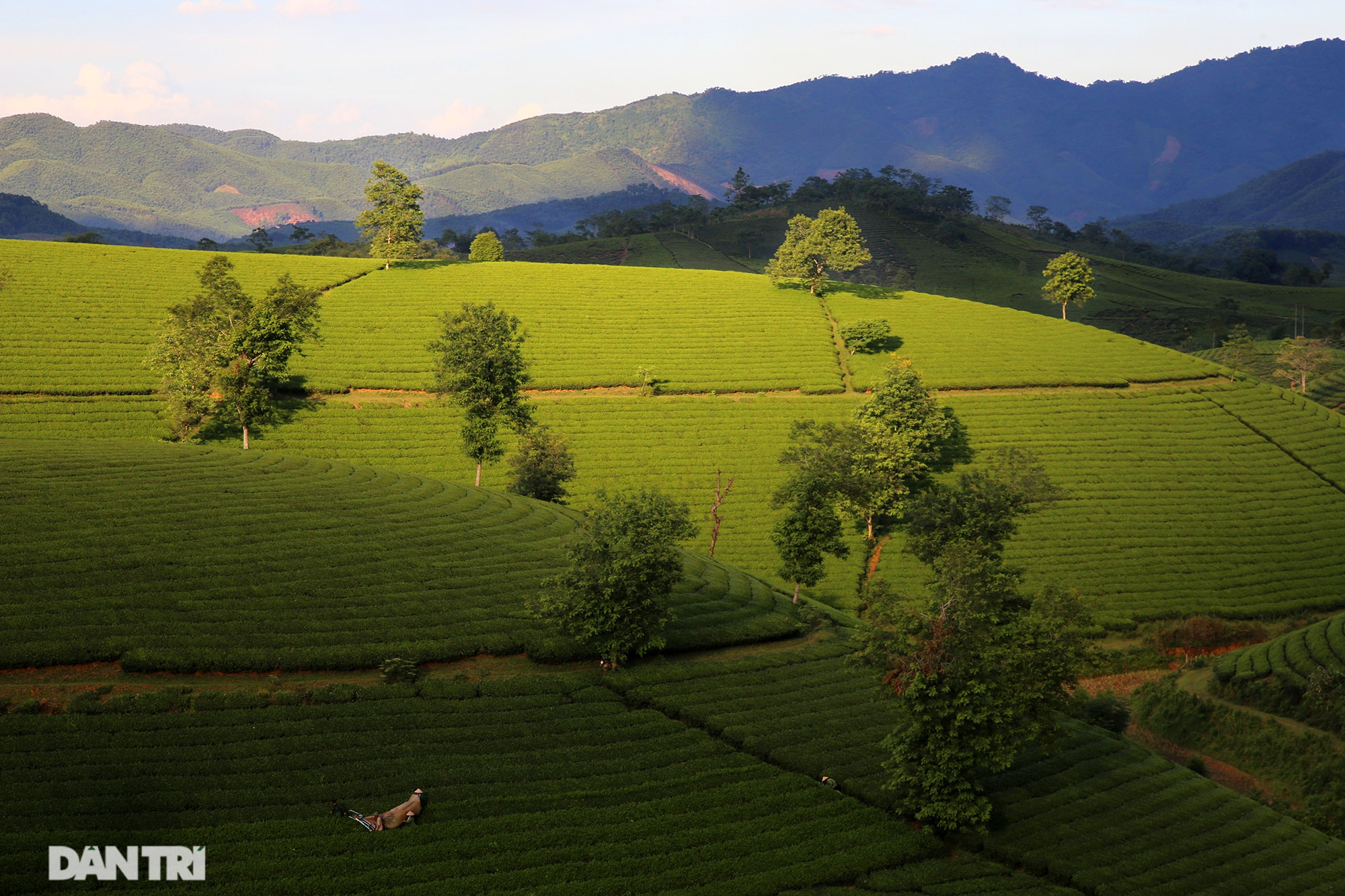 The stunning scenery of Long Coc tea hills in Phu Tho - 9