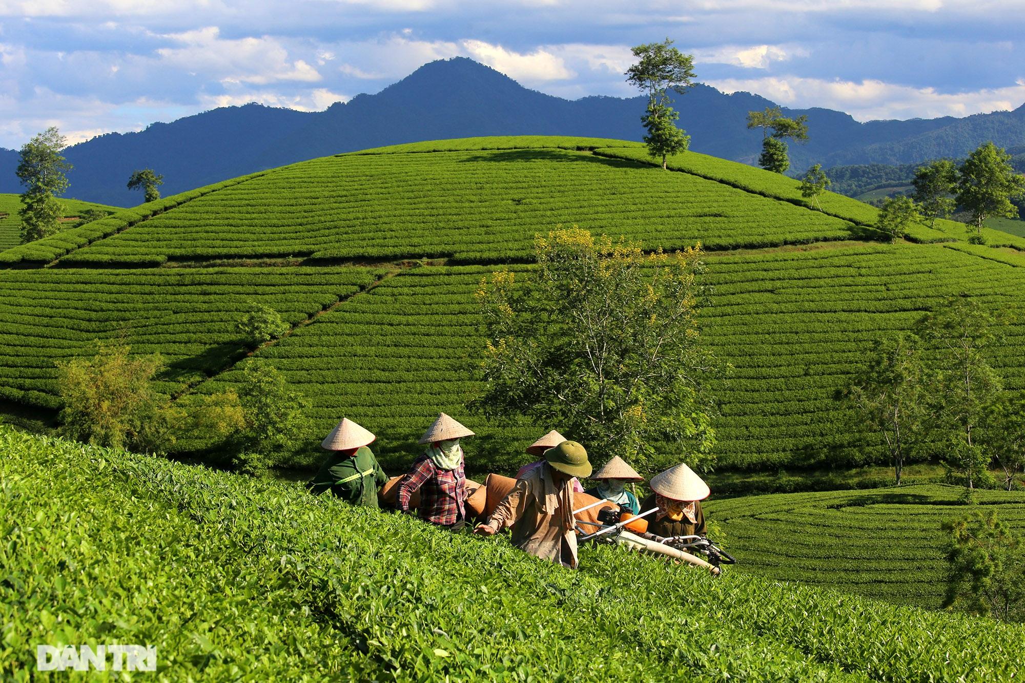 Overwhelming scenery of Long Coc tea hills in Phu Tho - 2