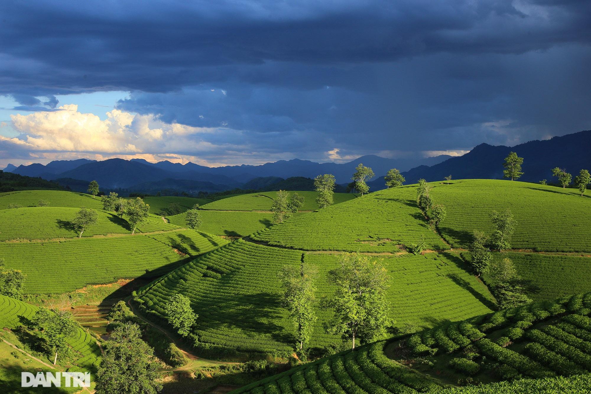 Overwhelming scenery of Long Coc tea hills in Phu Tho - 5