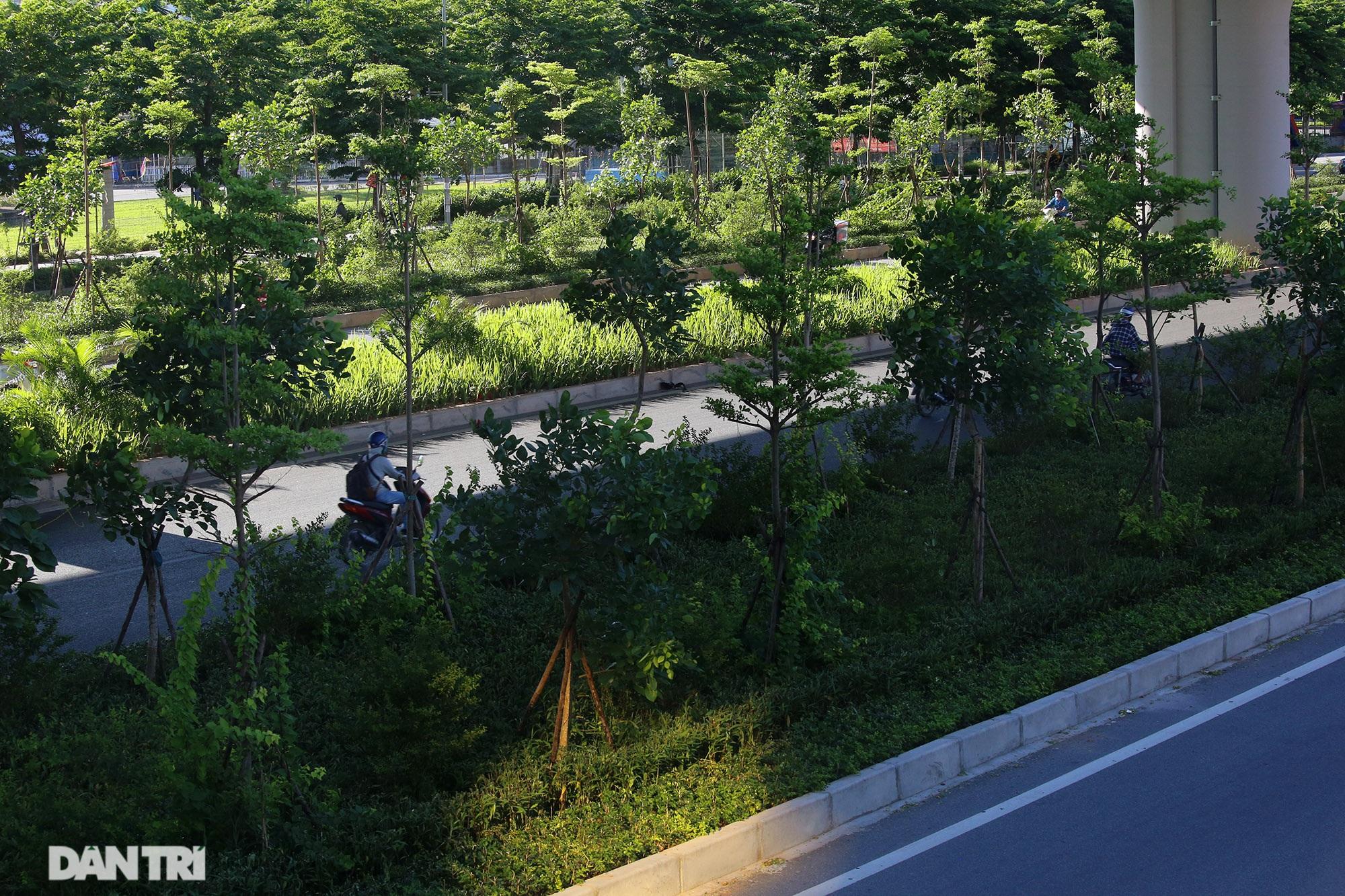 Con đường mát mẻ dài nhất Hà Nội giữa những ngày nắng nóng đỉnh điểm - 15