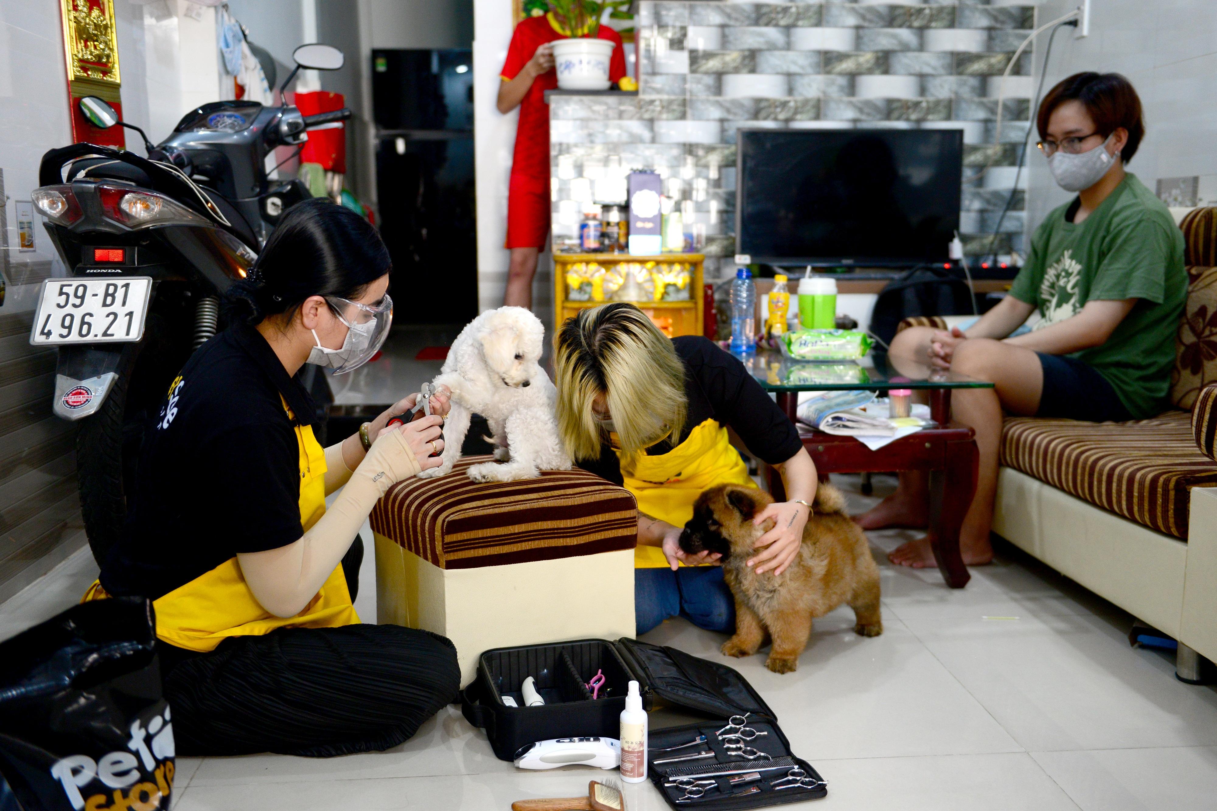 Đắt khách dịch vụ làm đẹp cho thú cưng tại nhà ở TPHCM mùa Covid-19 - 1